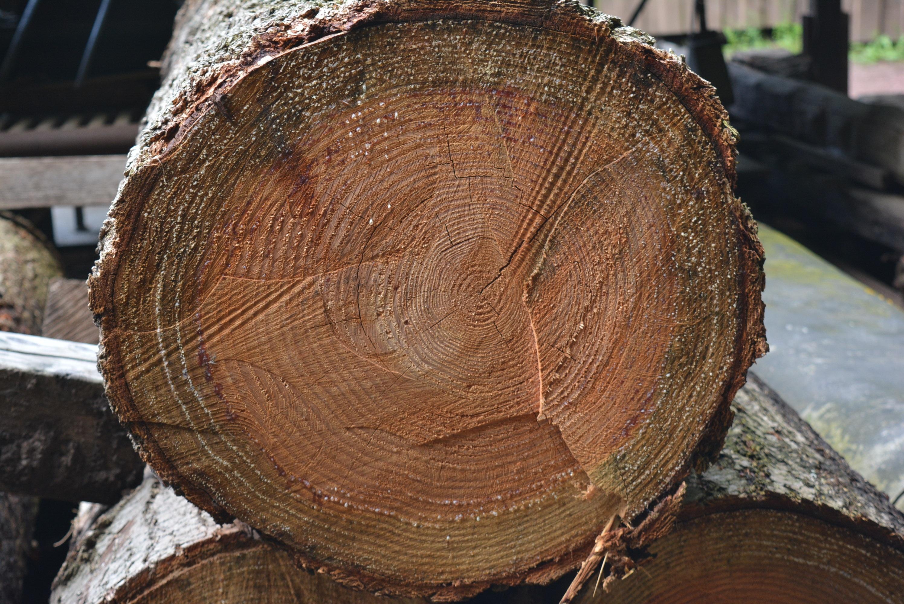 картинки с вырезом на дерево также при осаде