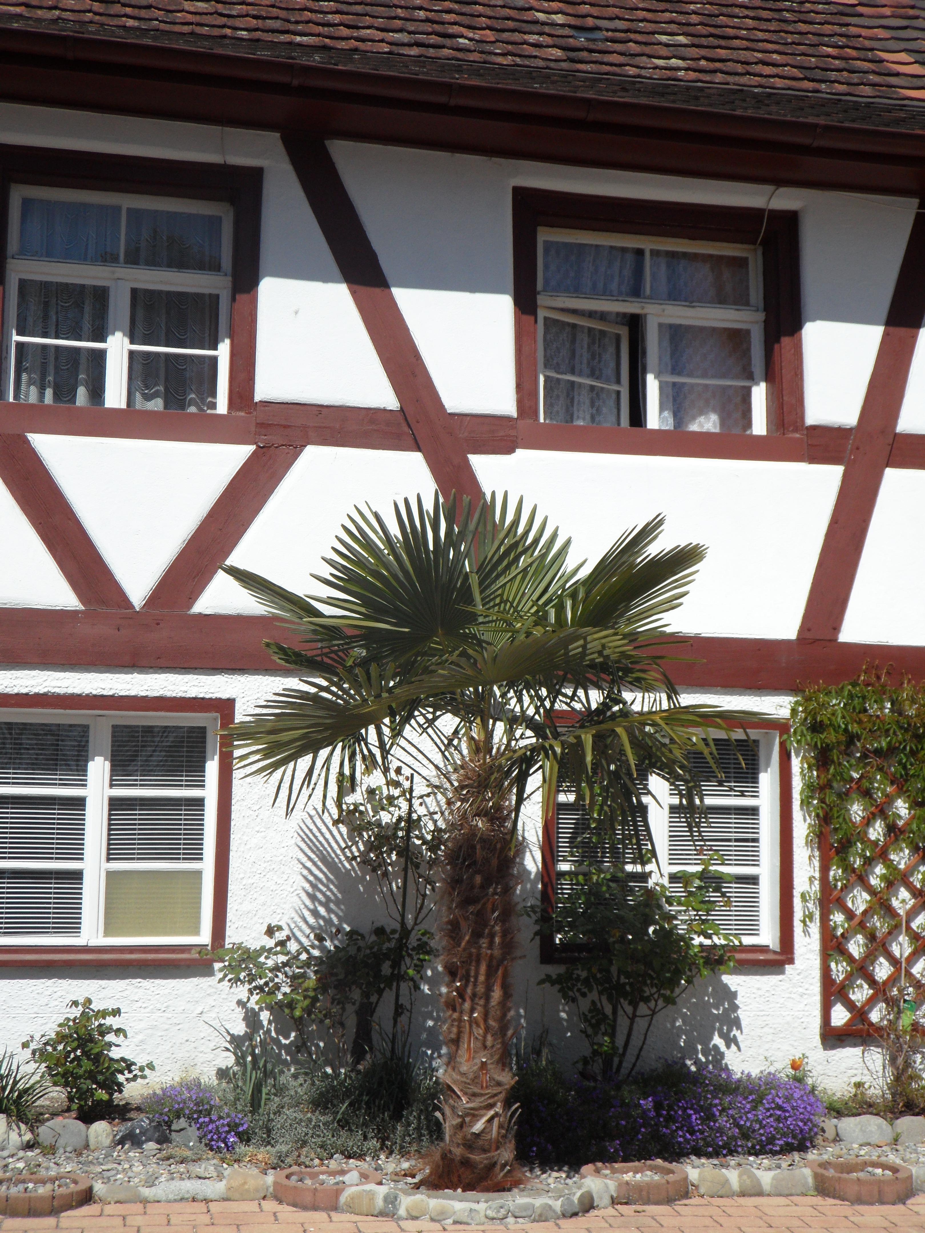 Fenster Fachwerkhaus kostenlose foto baum holz villa haus fenster dach gebäude