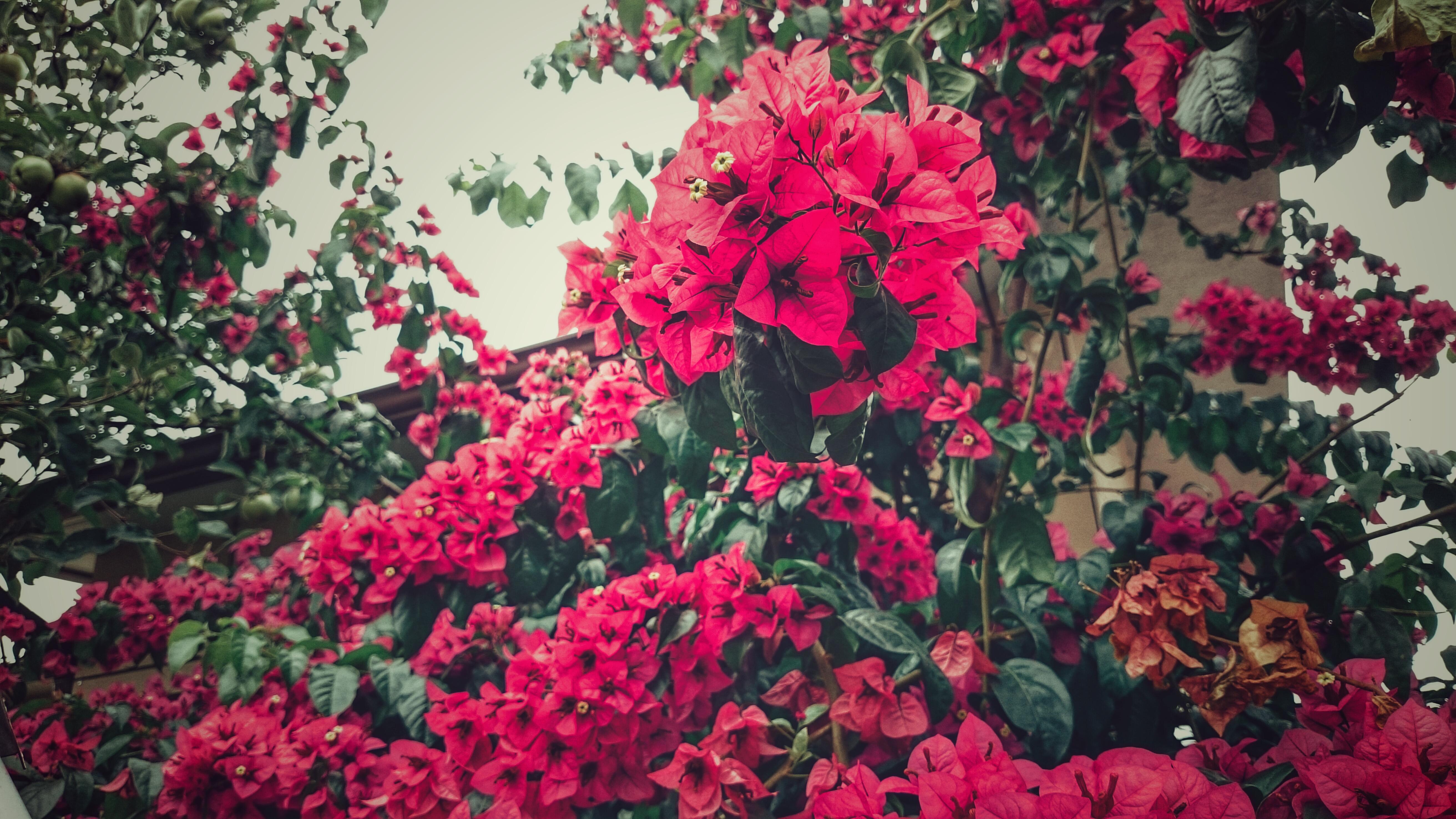 Images Gratuites : des arbres, vert, branches, ciel, feuilles, fleur ...