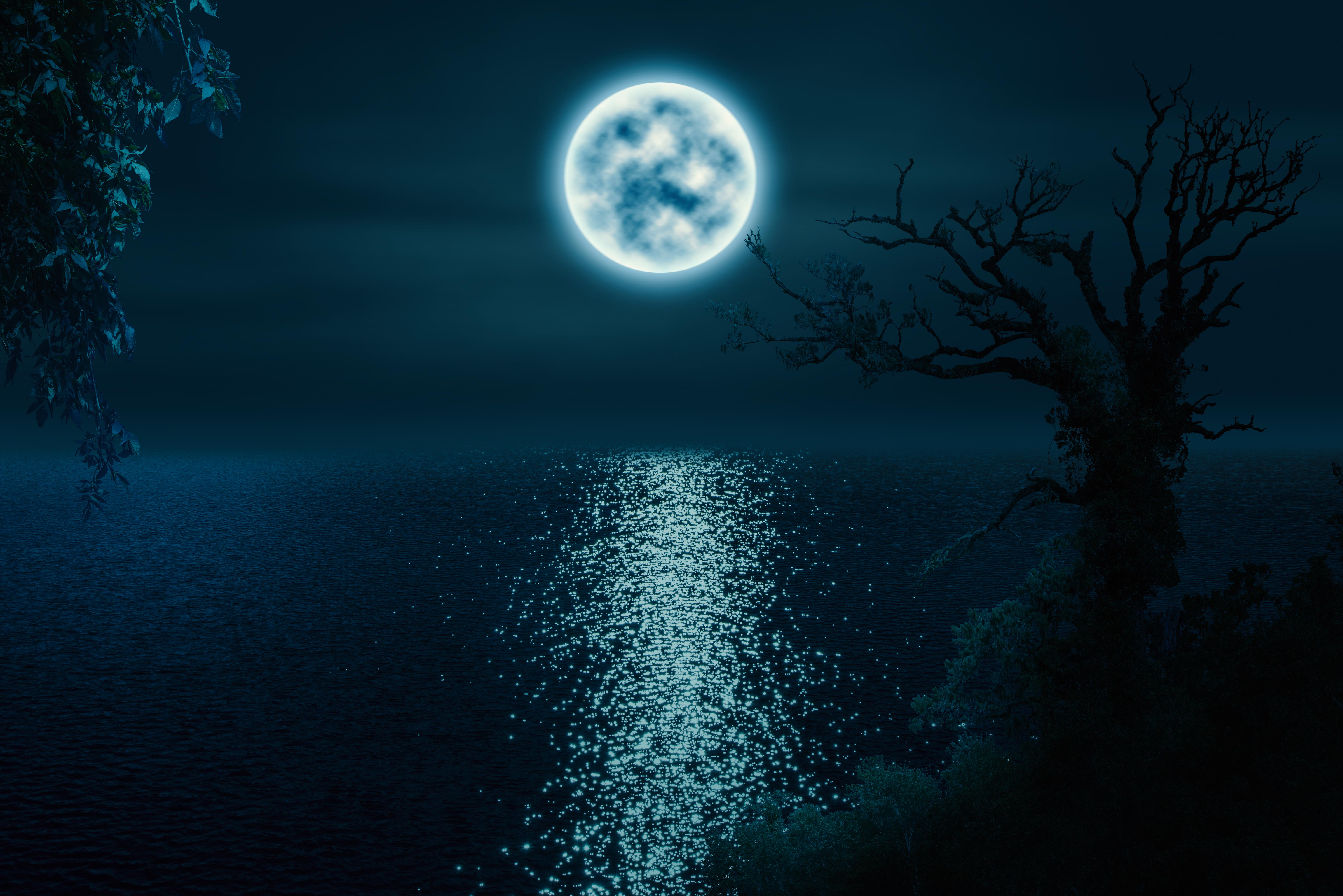 Free Images Trees Lake Moonlight Night Image Manipulation