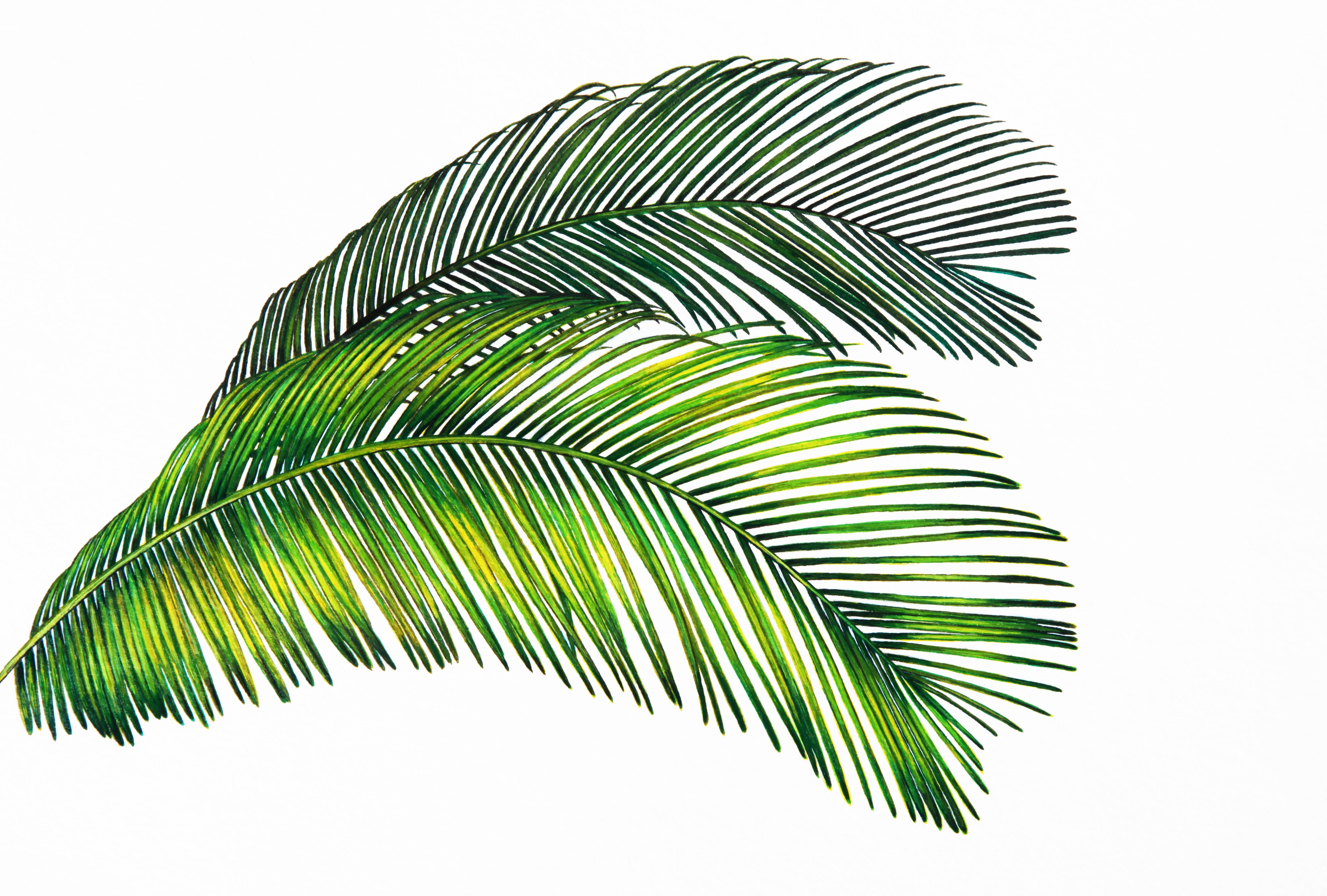 Images Gratuites Tropical Vert Deux Paume Feuilles La