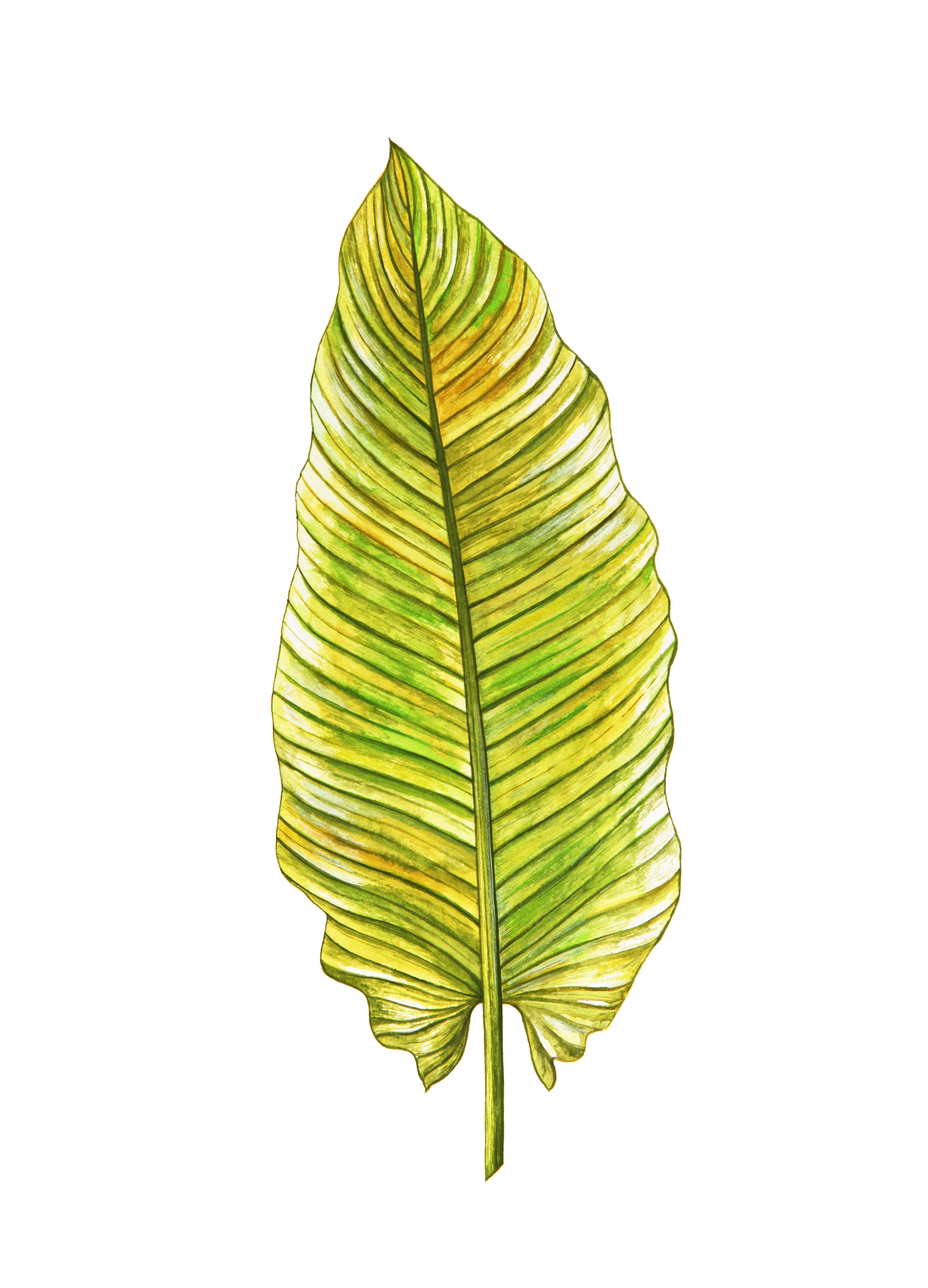 Gambar Tropis Hijau Kuning Daun Botani Artistik