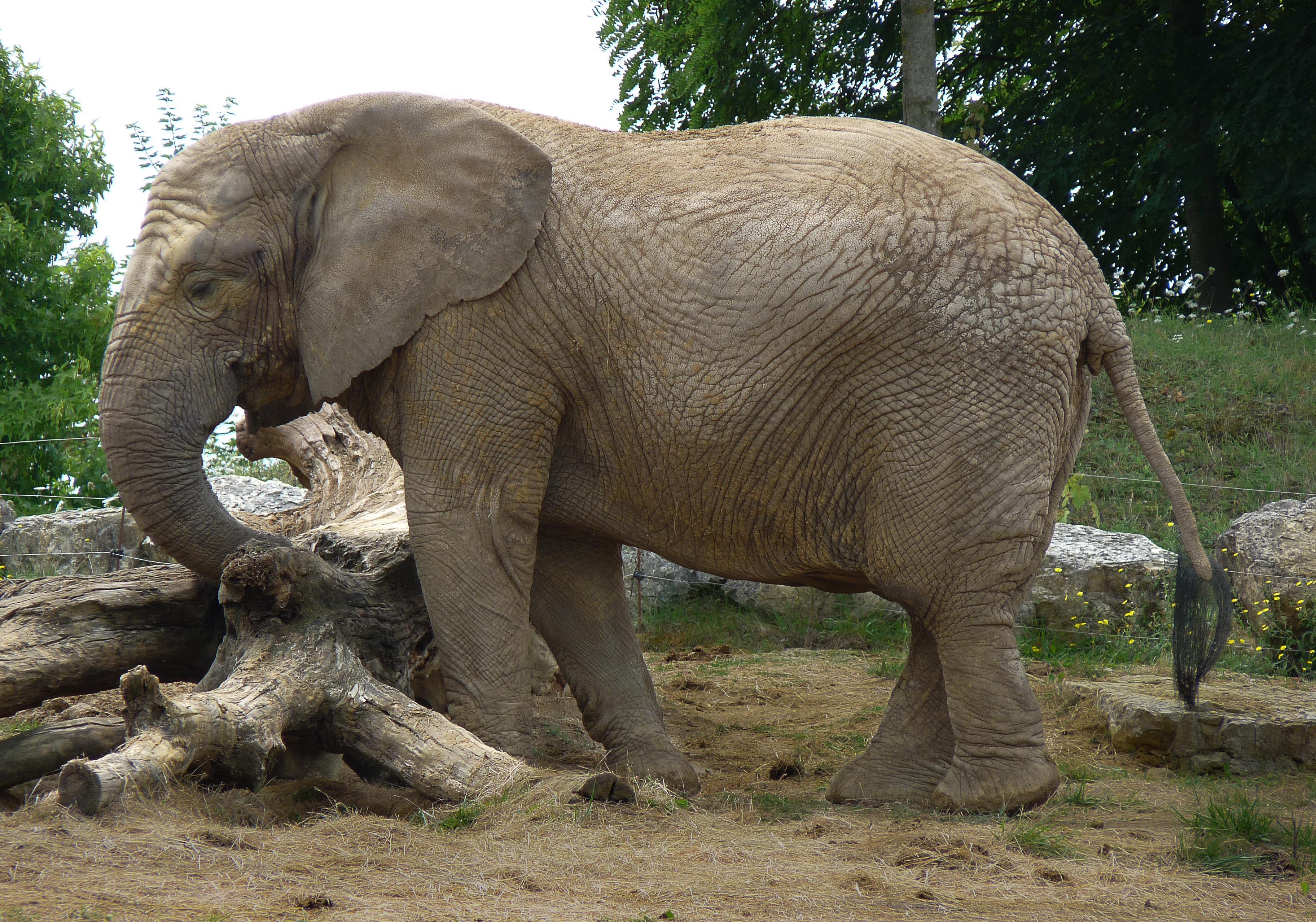 Африканские, слоны, фото - Скачать бесплатные изображения - Pixabay