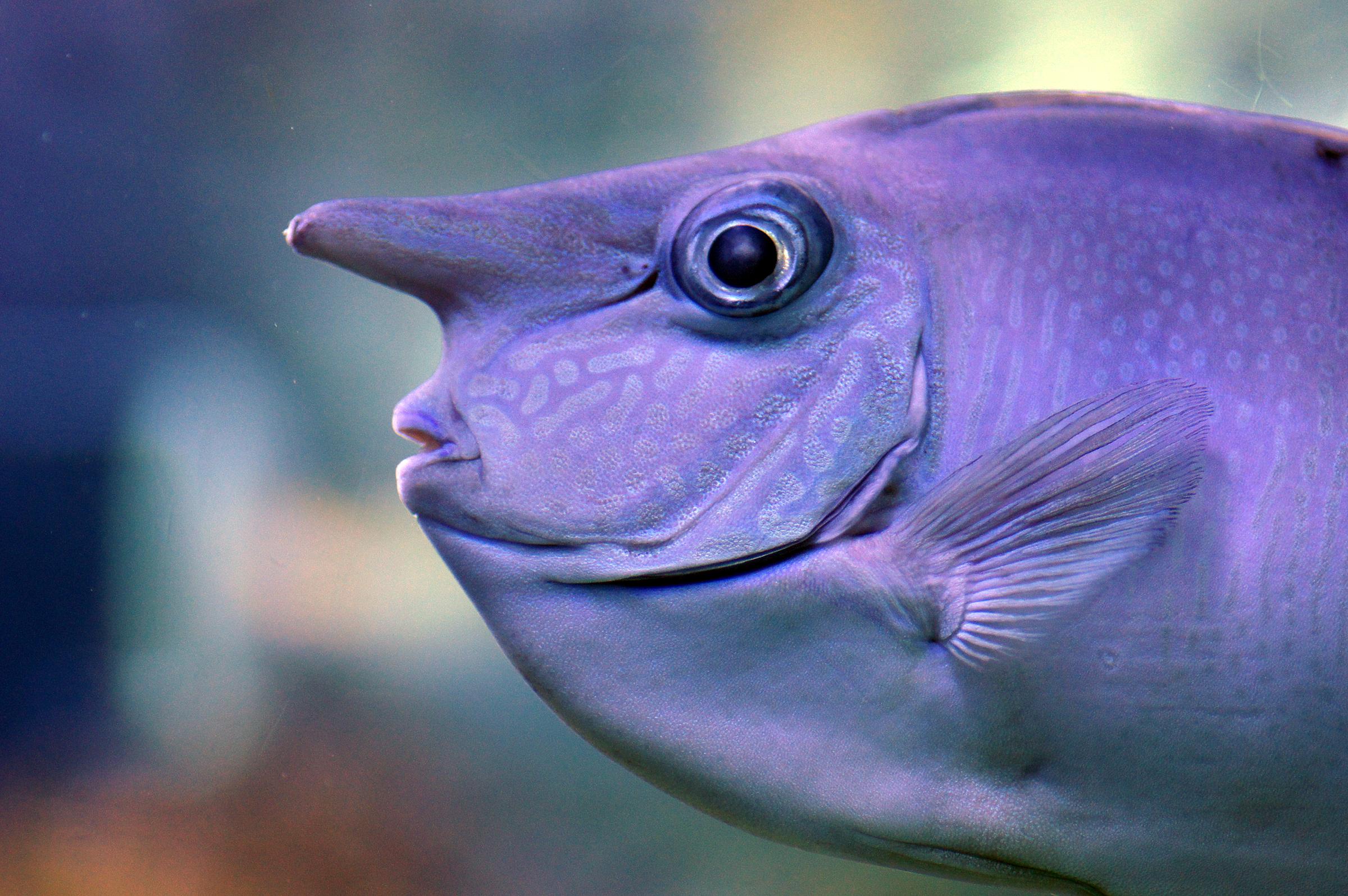 фотосессии рыба с клювом картинки одежда высокого