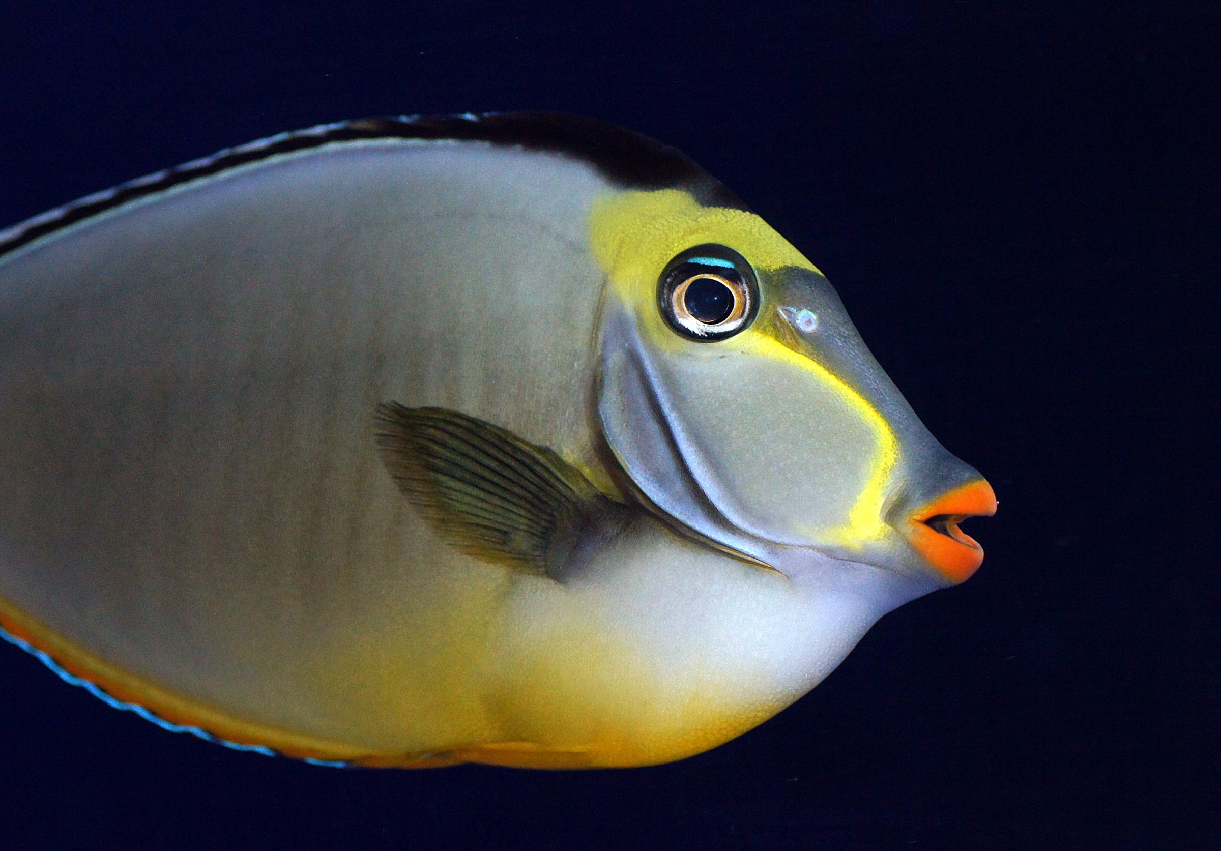 долго, рыба с клювом картинки разных мест батуми