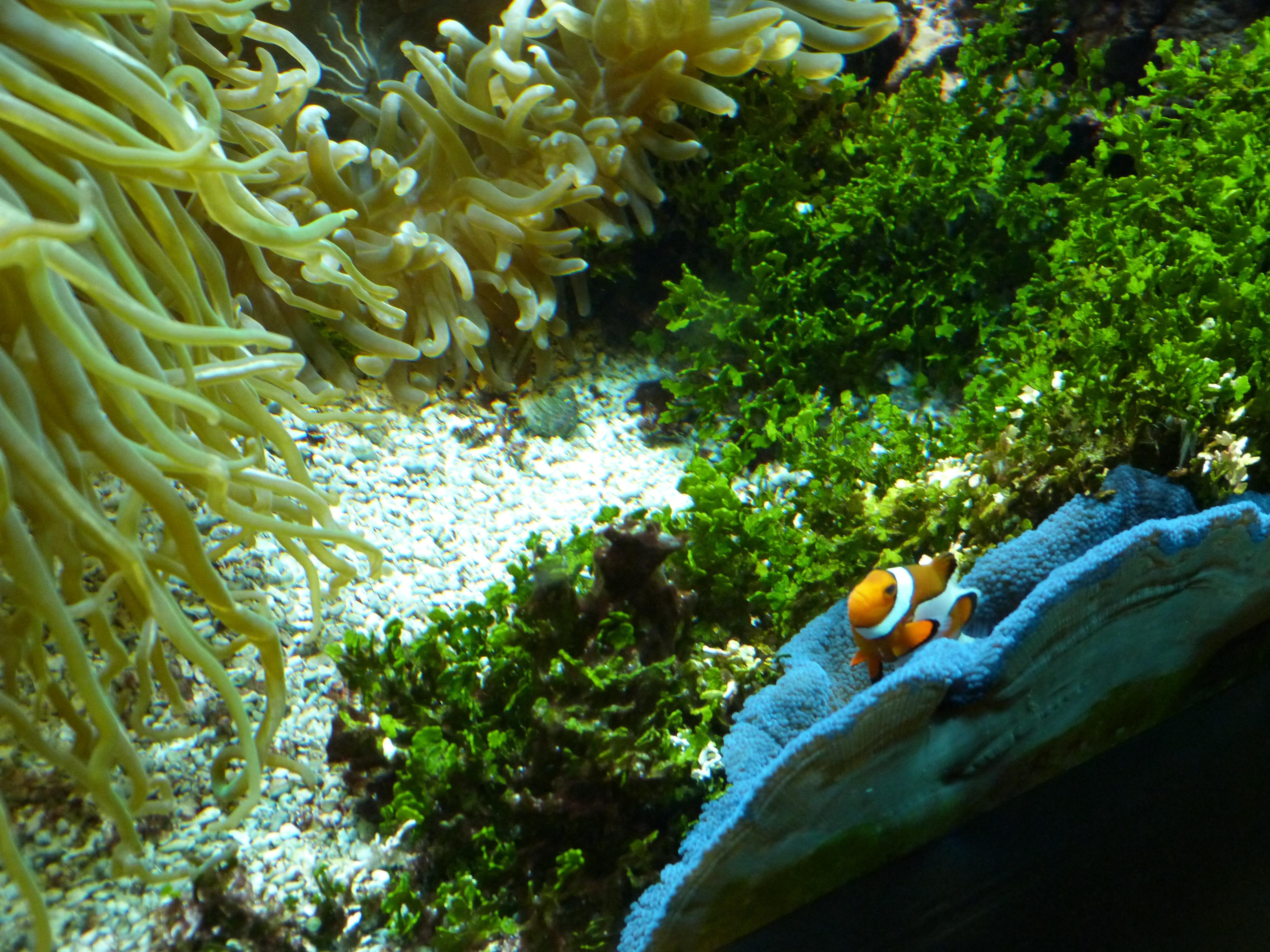 Free Images : colorful, fish, fauna, sea animal, coral reef ...