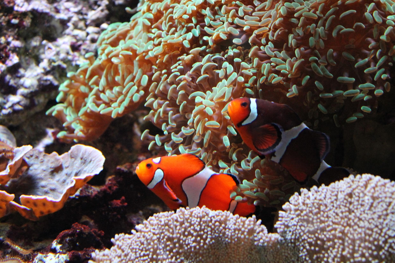 Gambar Bawah Air Fauna Batu Karang Invertebrata Akuarium Atau