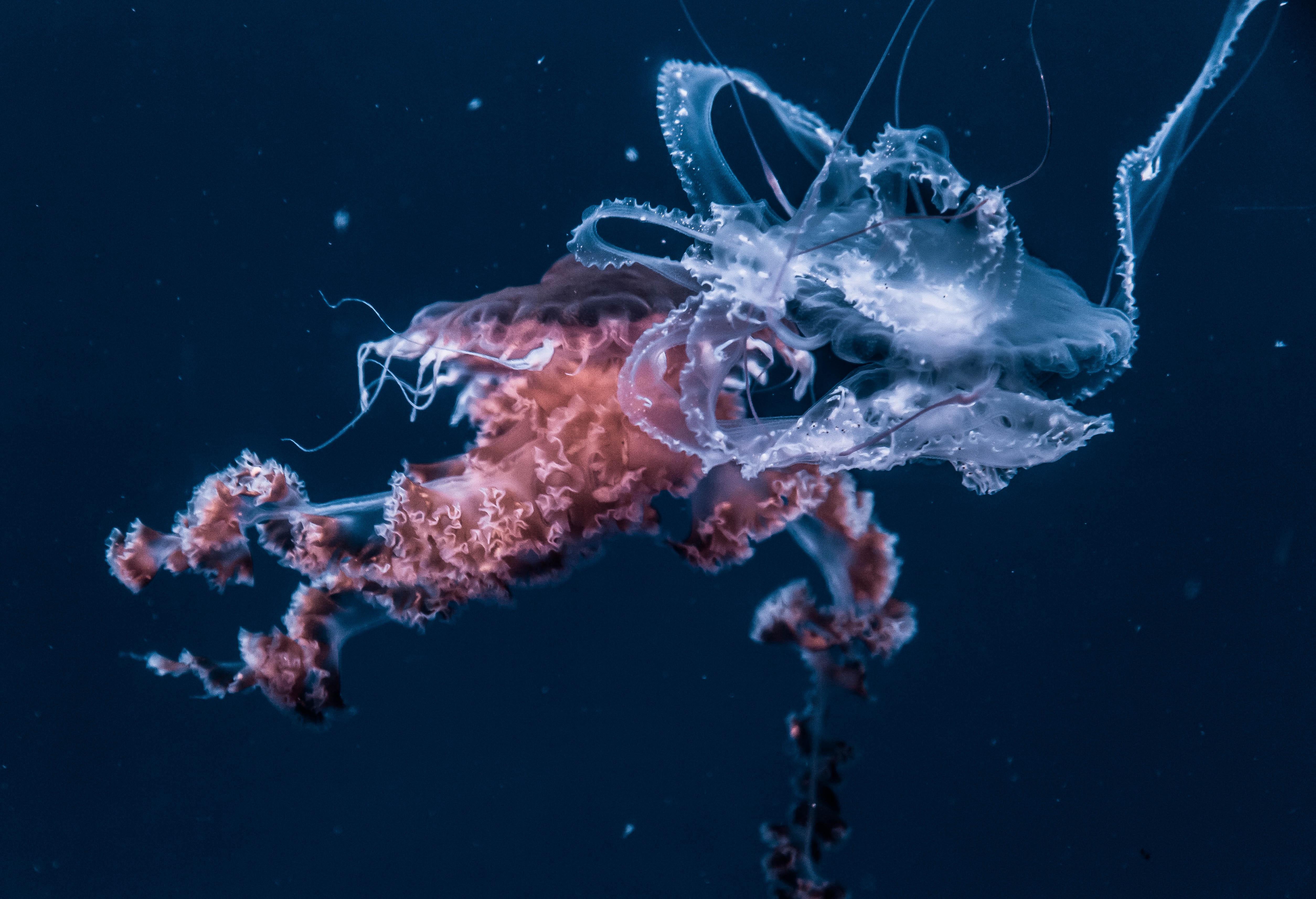 free images underwater invertebrate reef zooplankton