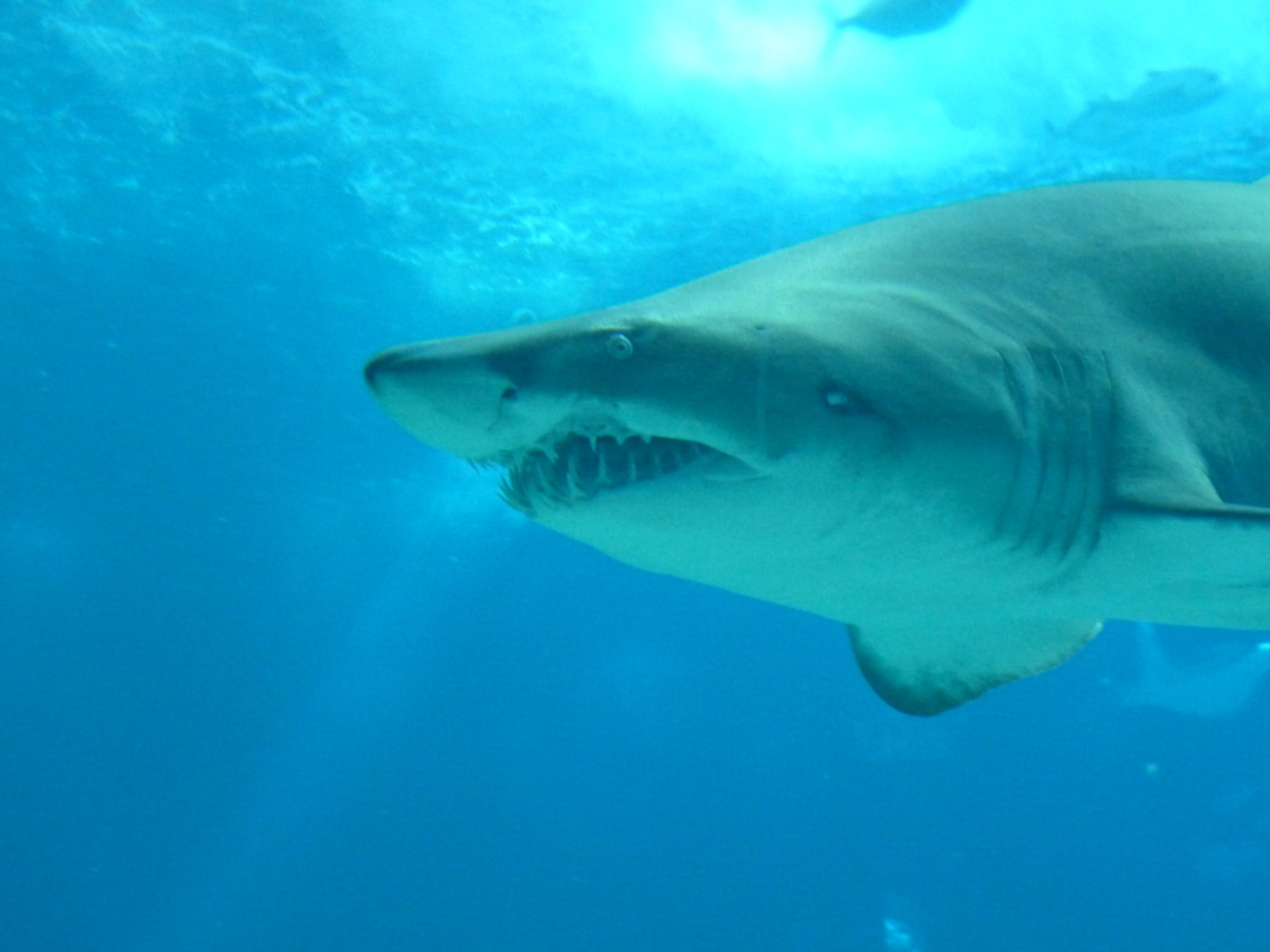 Images gratuites sous marin la biologie poisson - Grand poisson de mer ...