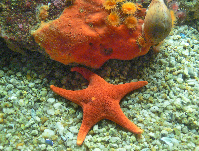 Free Images : underwater, jellyfish, fauna, starfish, coral reef, invertebrate, aquarium, crabs ...