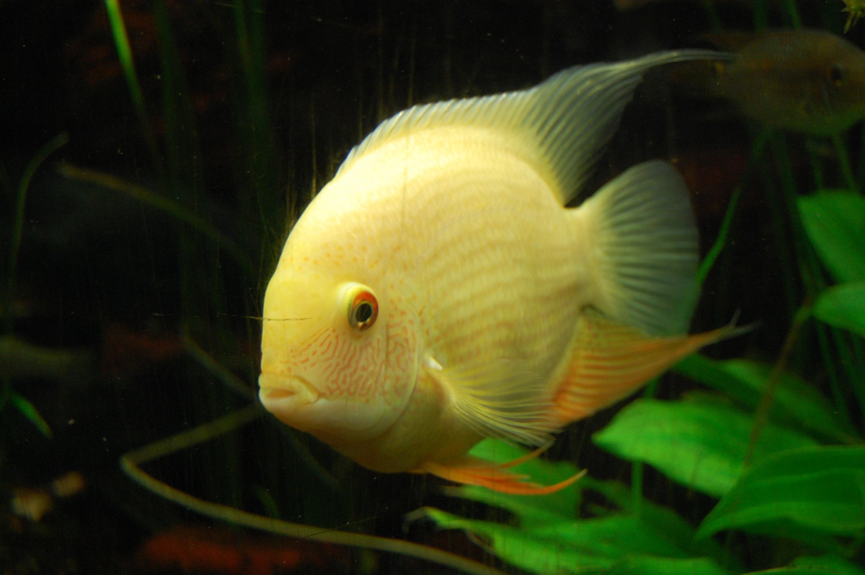Fotos gratis : verde, color, biología, amarillo, pescado, fauna ...