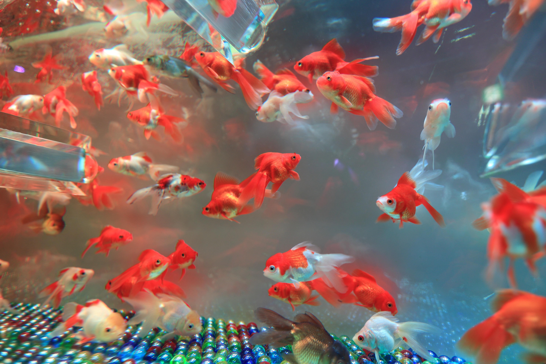 Images gratuites sous marin la biologie r cif de for Aquarium poisson rouge eau