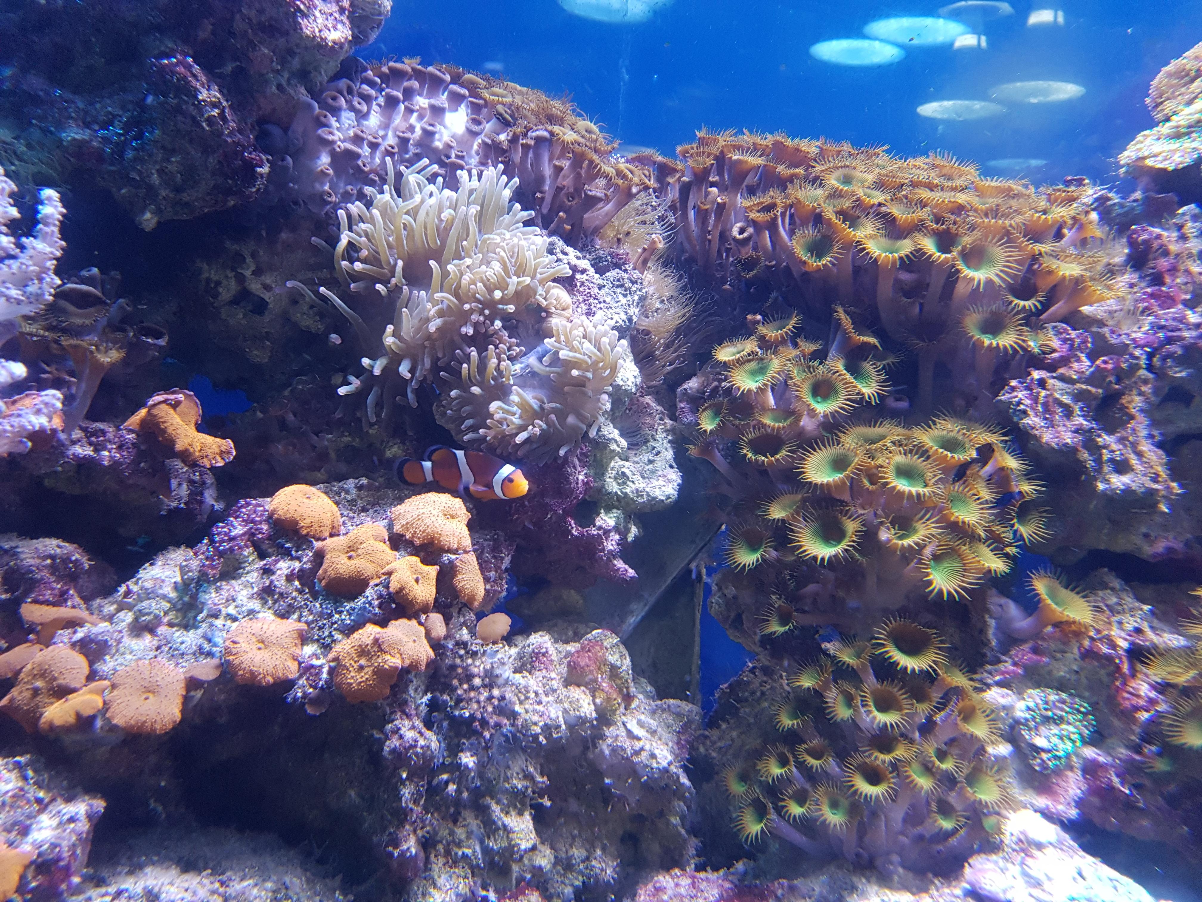 Free Images : underwater, tropical, coral reef, invertebrate