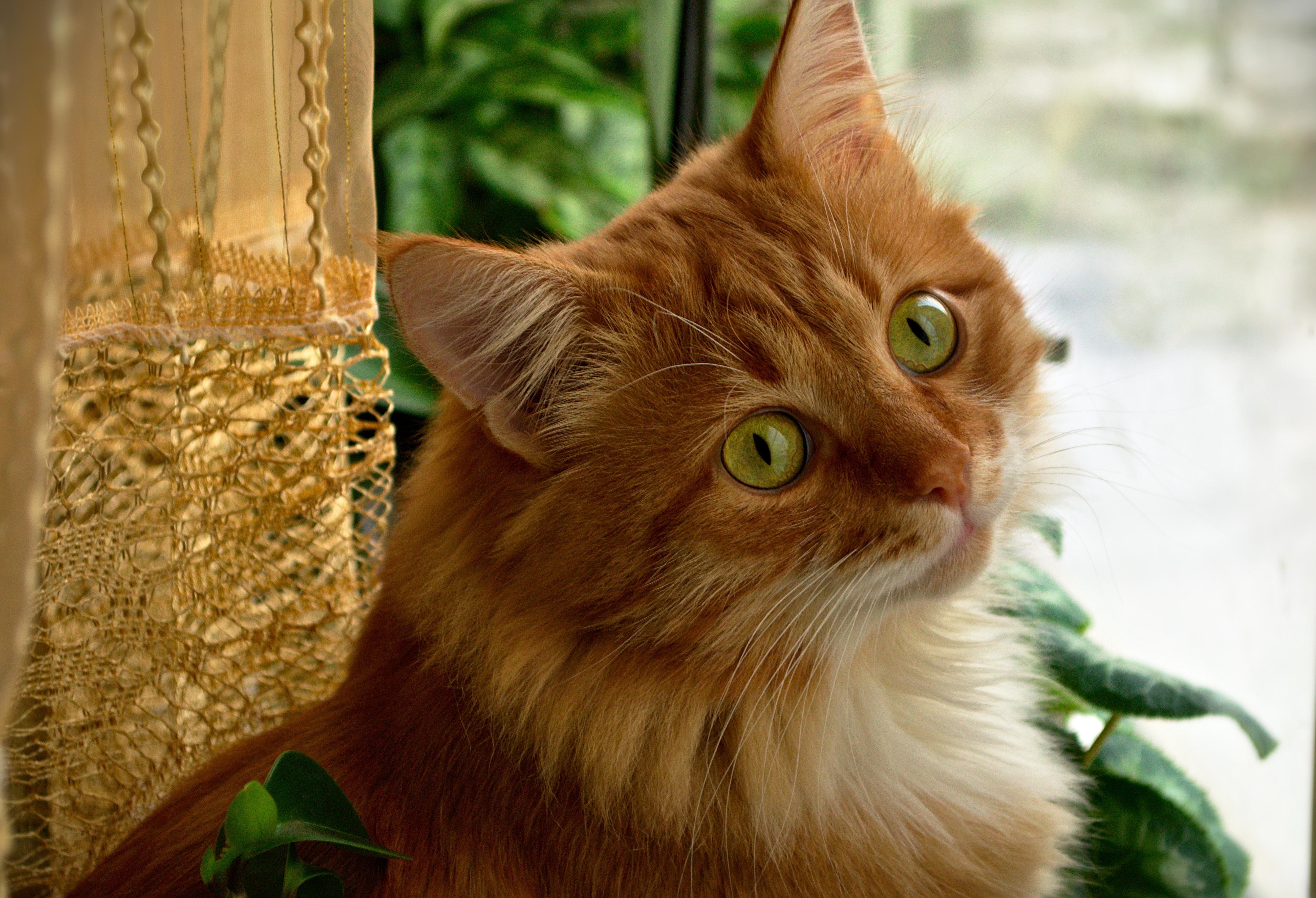 Рождения александр, веселый рыжий кот картинки