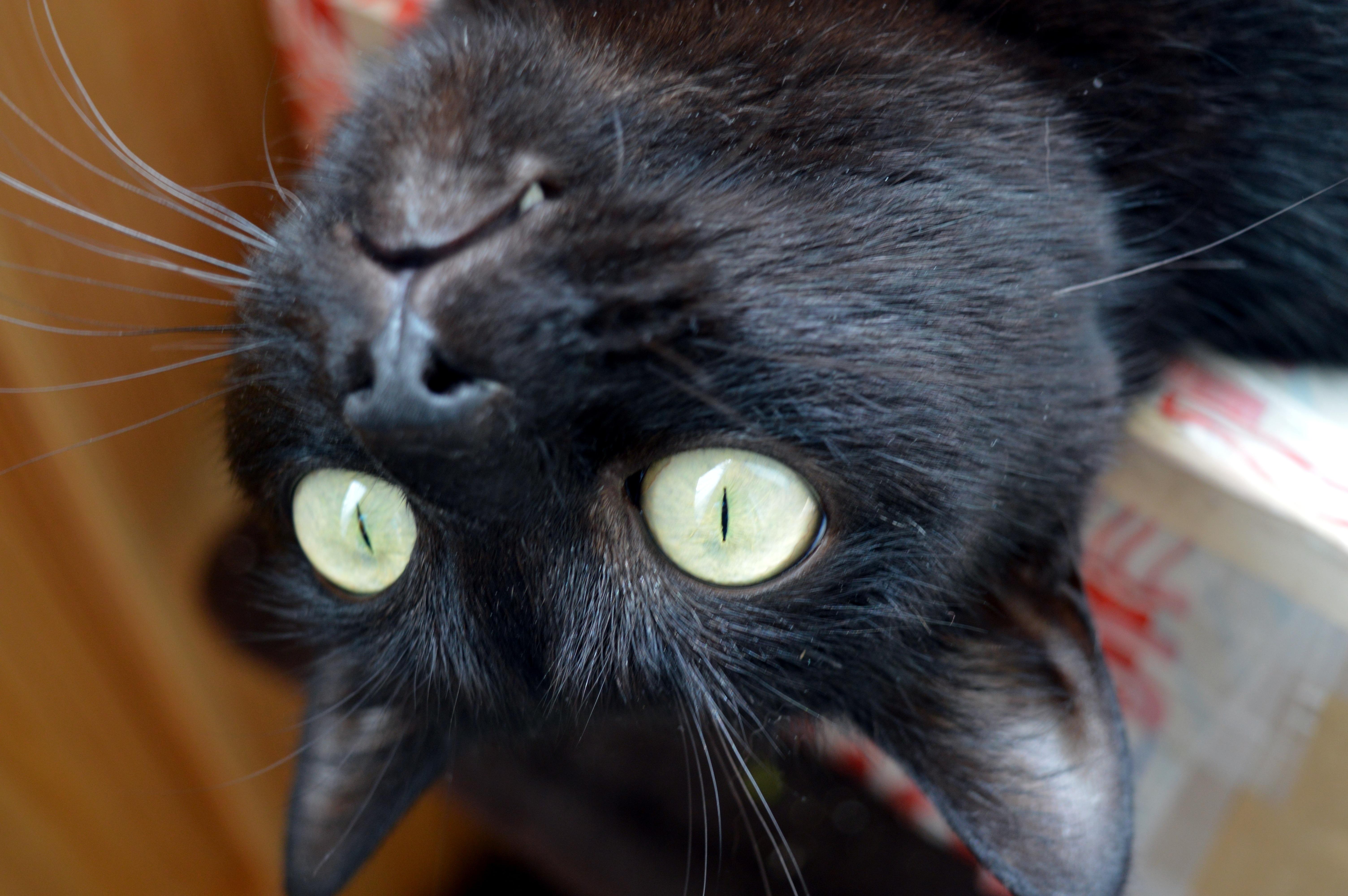 Nejlepší kočička černá