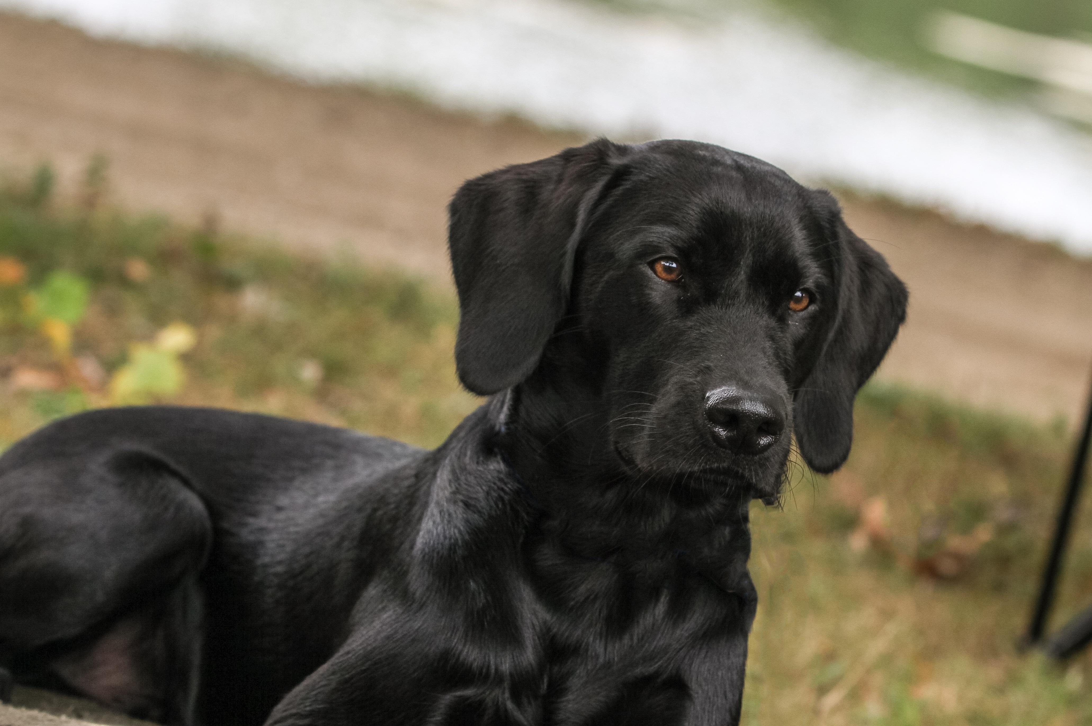 Hund Schwarz