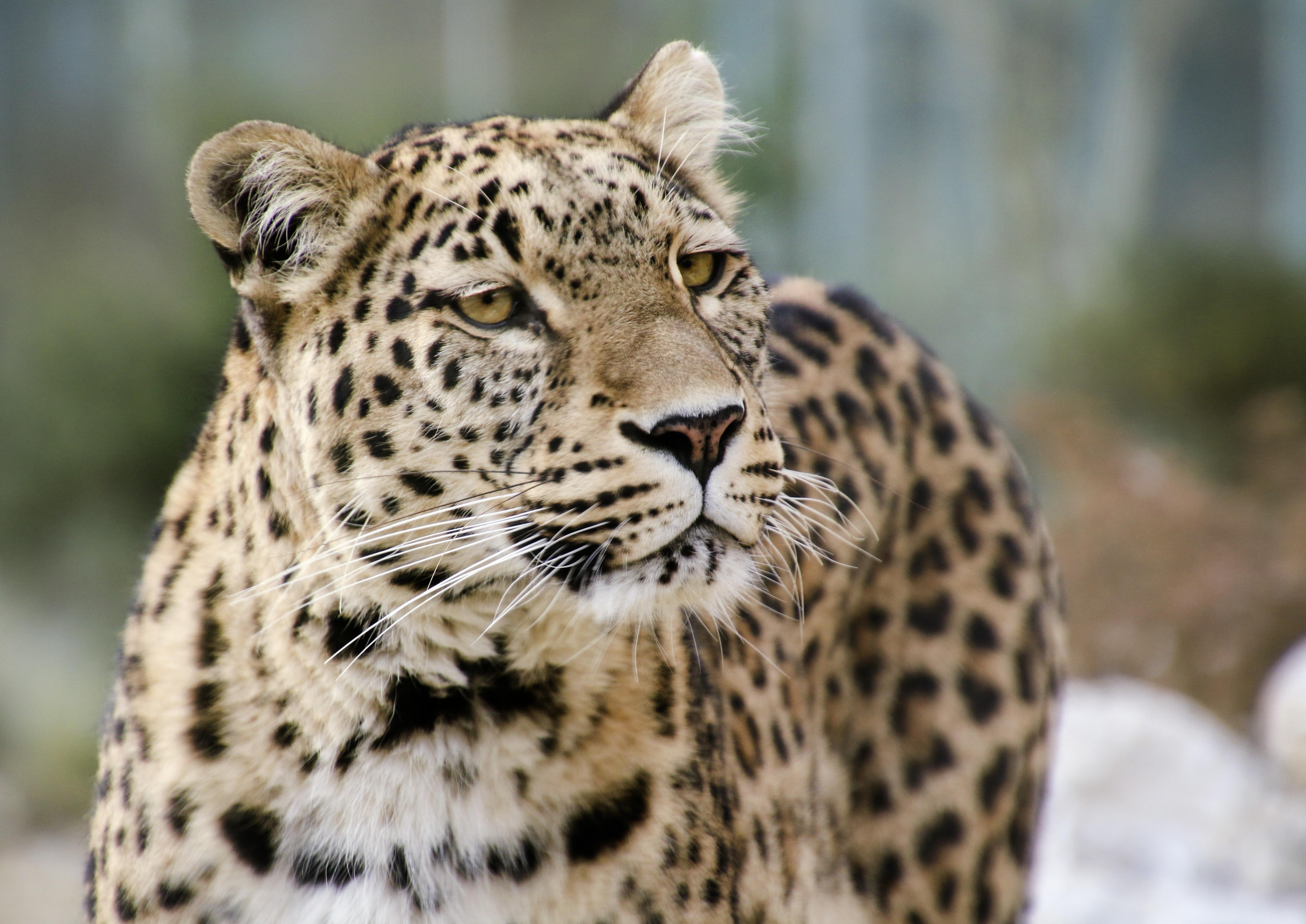 Darmowe Zdjęcia Widok Dzikiej Przyrody Ogród Zoologiczny