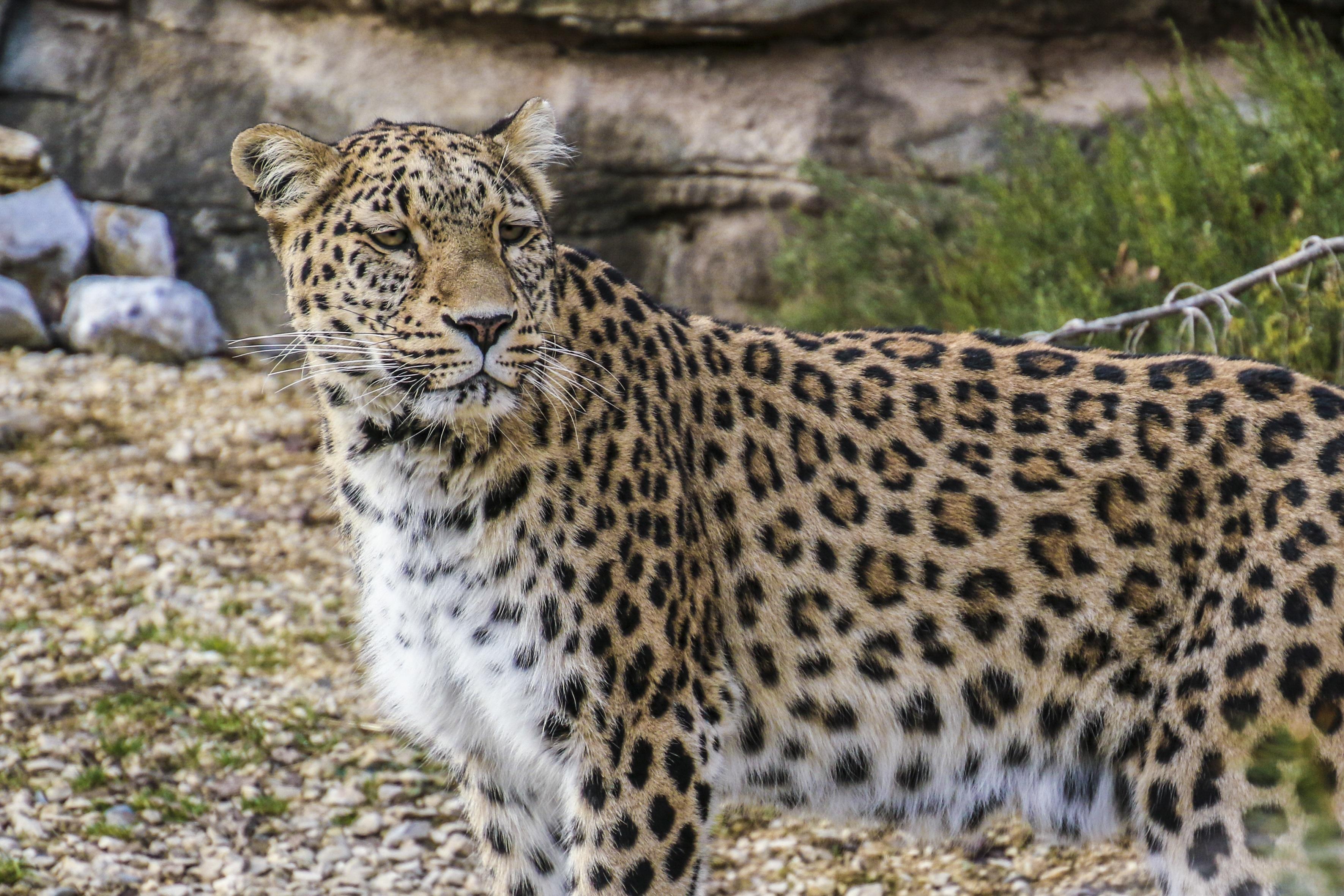Gambar : melihat, margasatwa, kebun binatang, potret