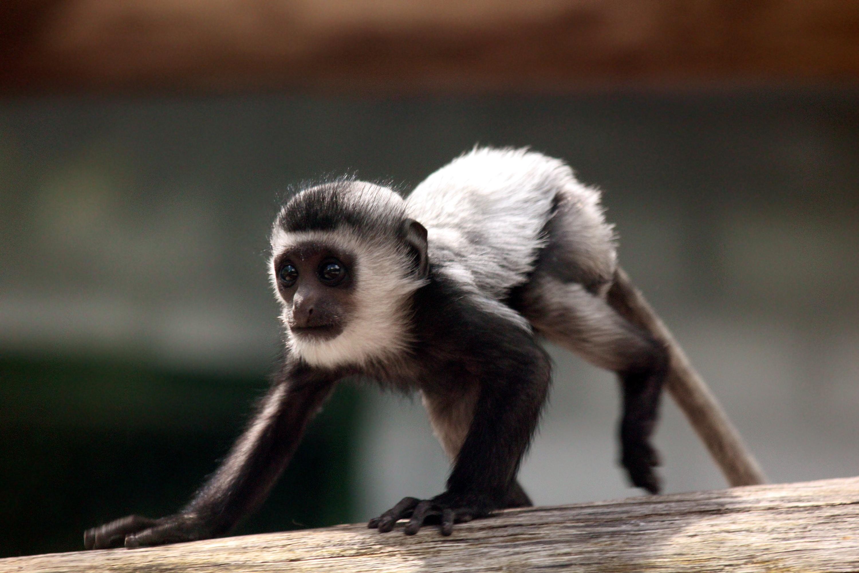Images gratuites vue faune zoo jeune mammif re - Images d animaux sauvages gratuites ...