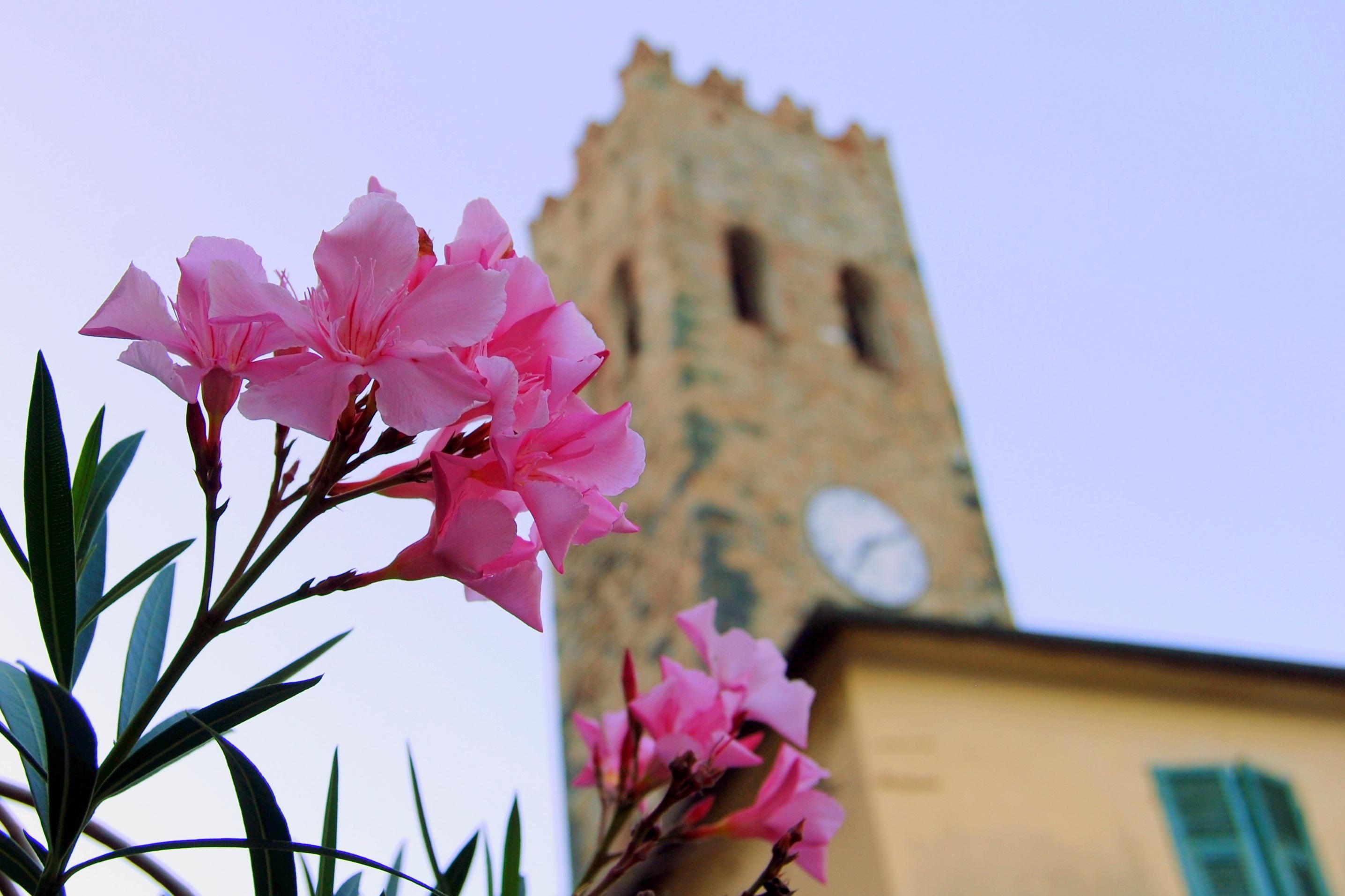 Цветы цветочном, букет италия фото