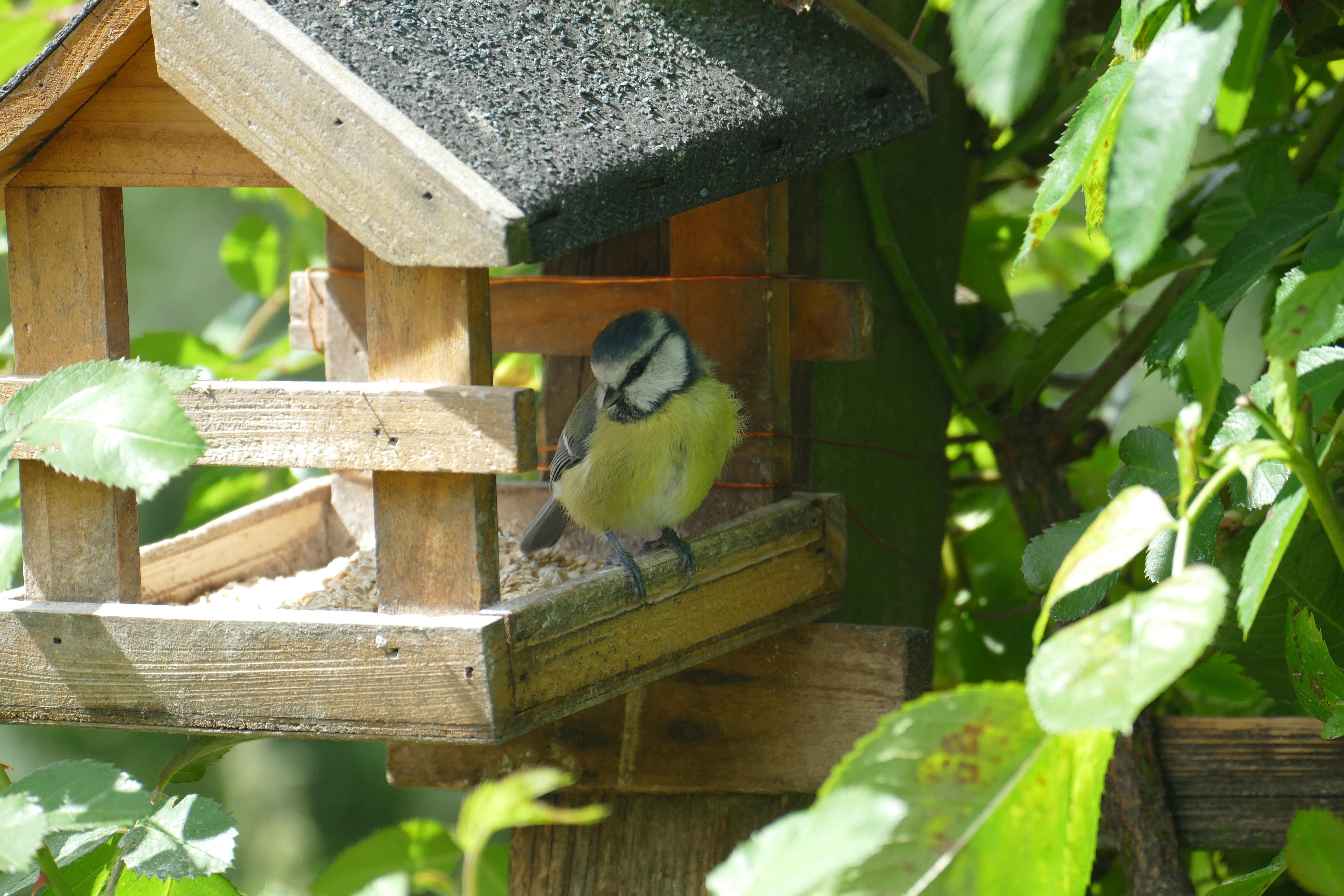 walmart feeders feeder ip antique mason waterer wild jar bird glass com blue perky pet