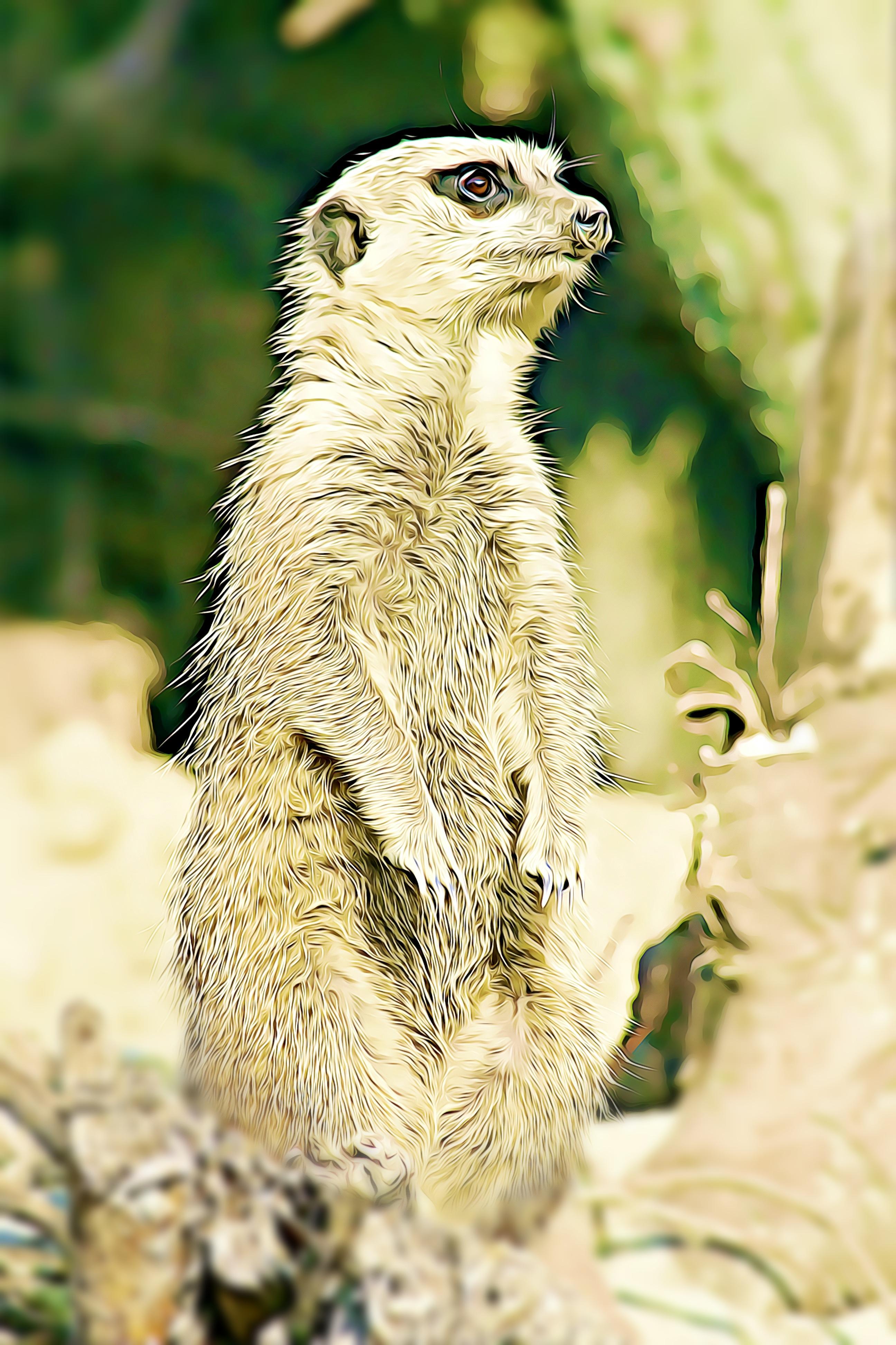 Gambar Menonton Alam Margasatwa Burung Hantu Fauna