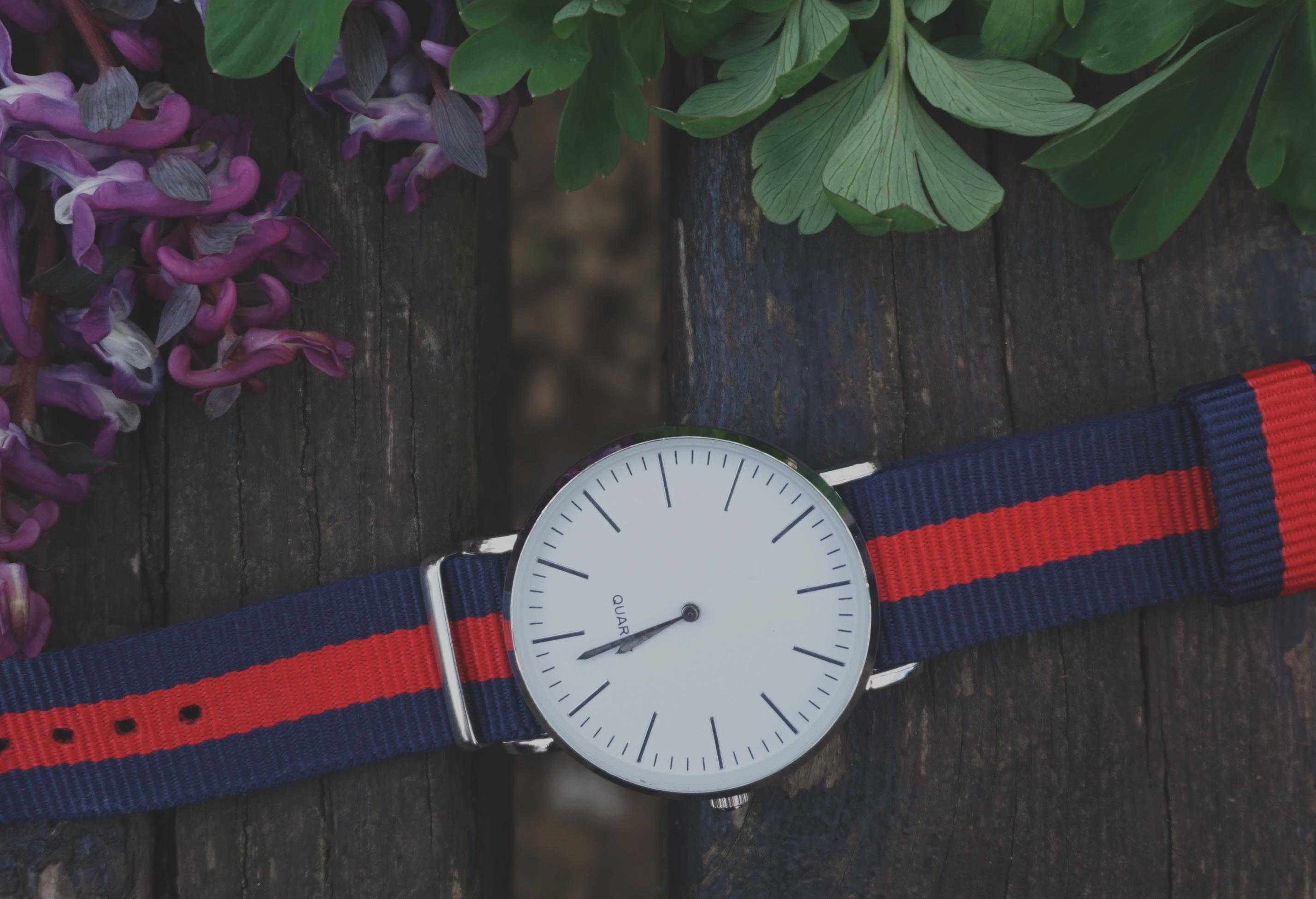 Fotos gratis : hora, rojo, azul, maderas, flora, Plantas, Flores ...