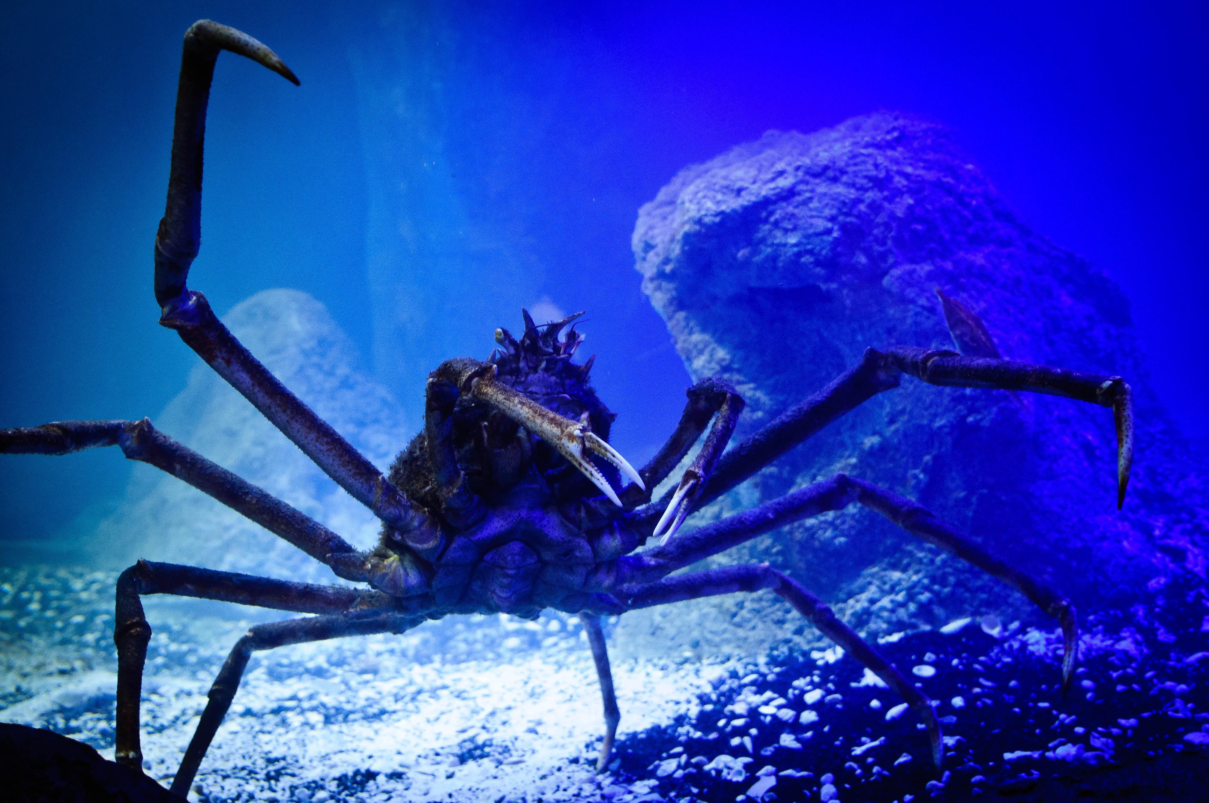 free images  water animal underwater invertebrate