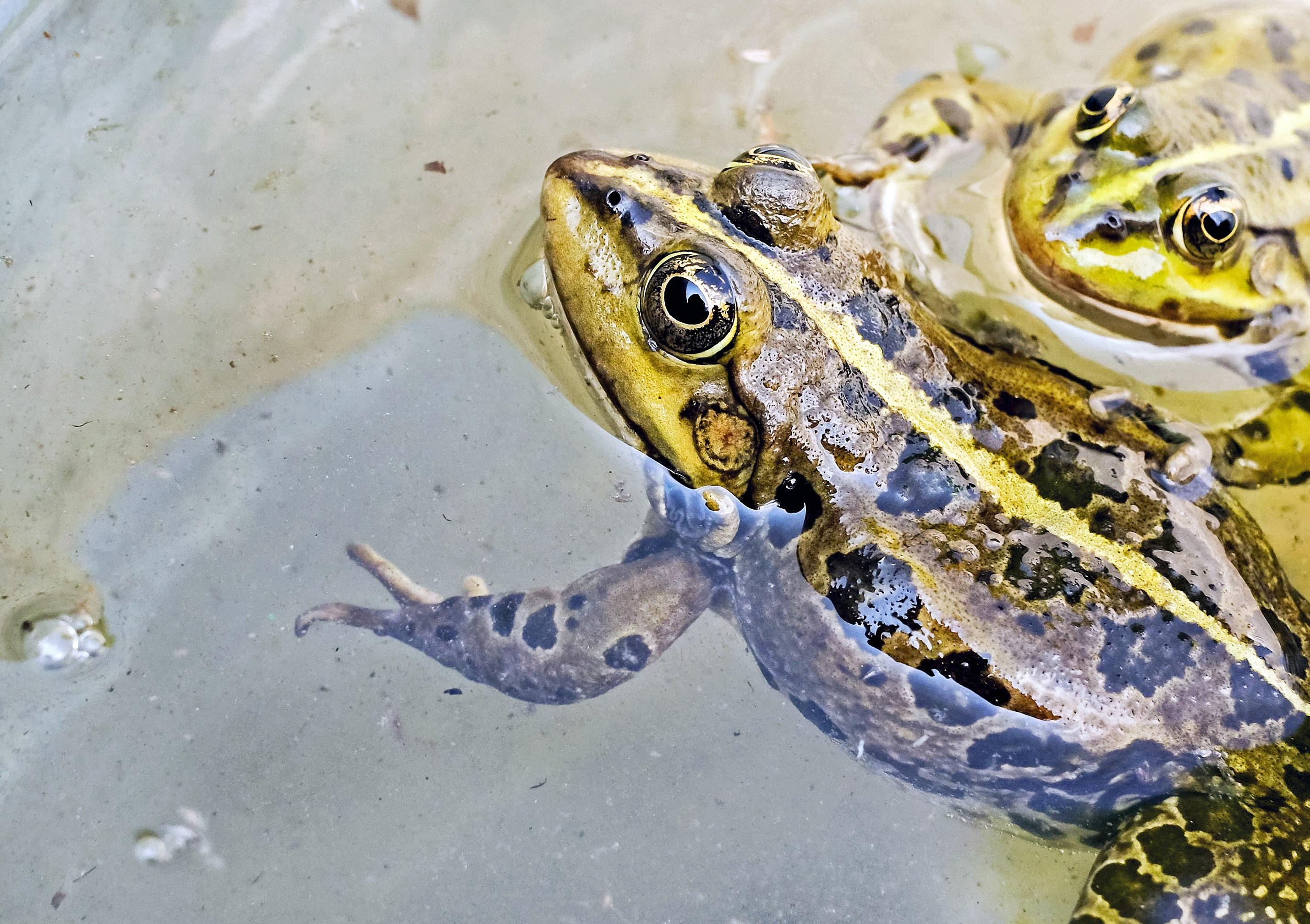 free images animal wildlife green amphibian fauna close up