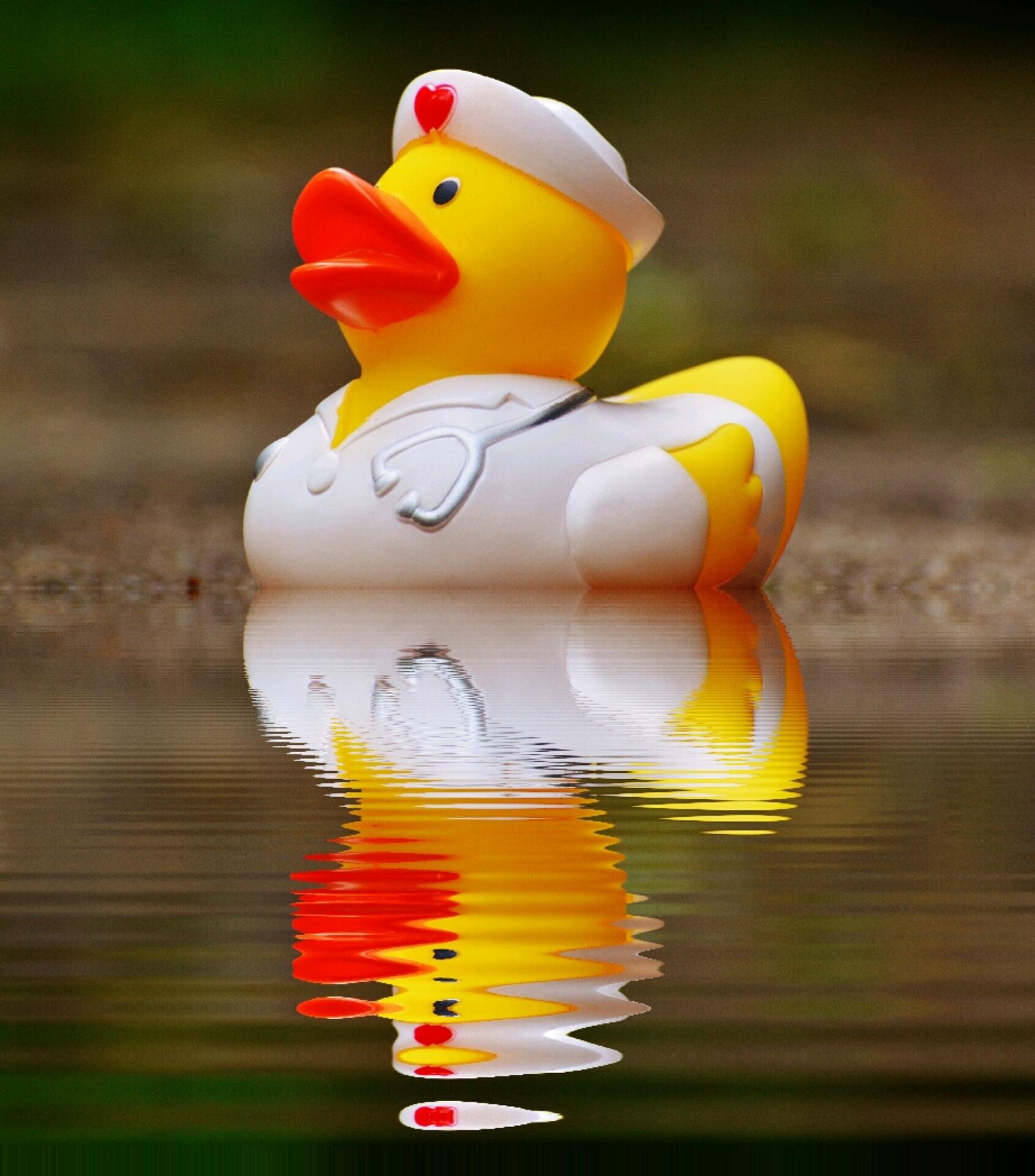 Free Images : sweet, cute, swim, beak, color, yellow, figure ...