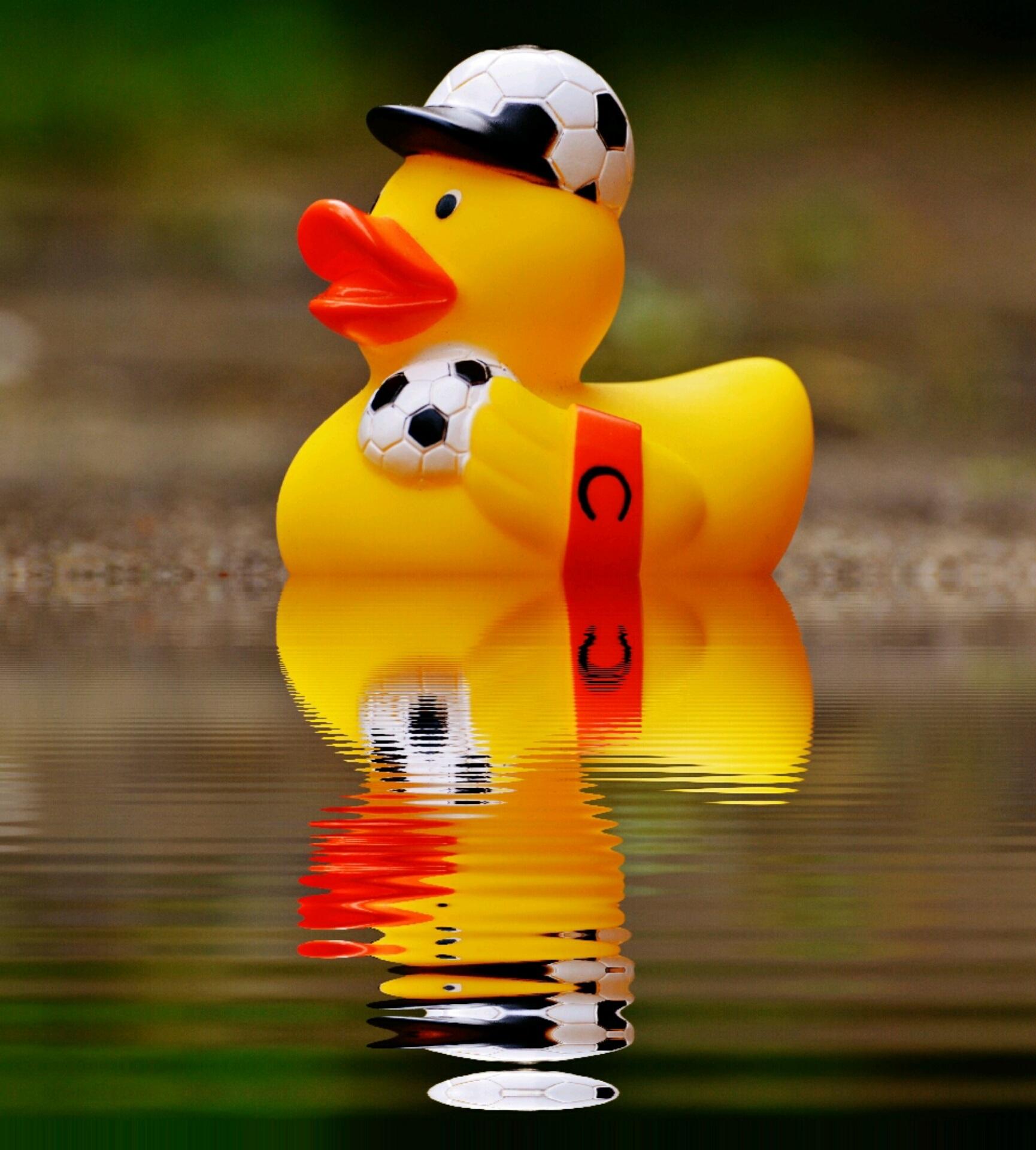 Bildet : vann, fugl, s...