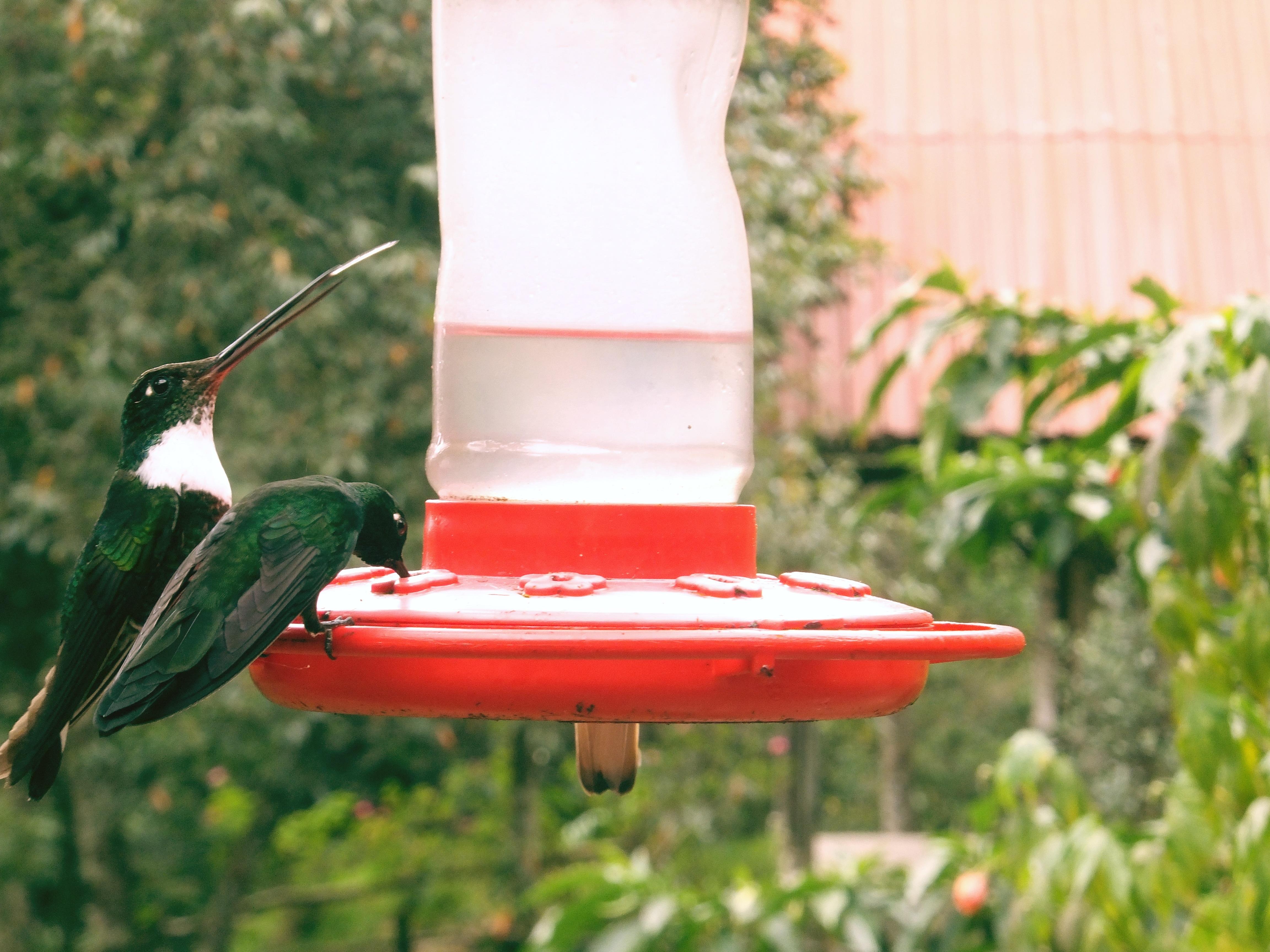 Immagini belle acqua uccello ala prato aria fiore animale