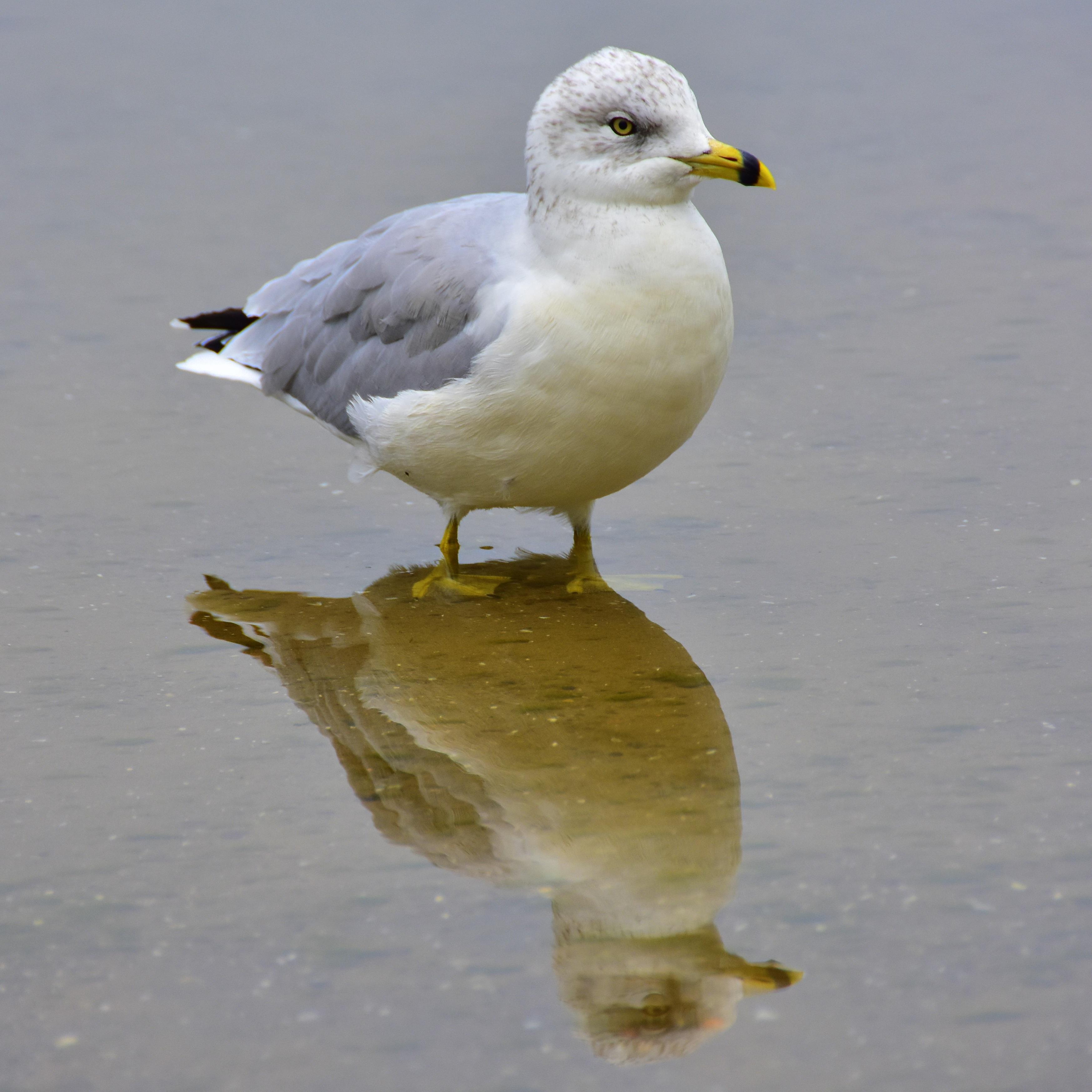 obraz vtáka