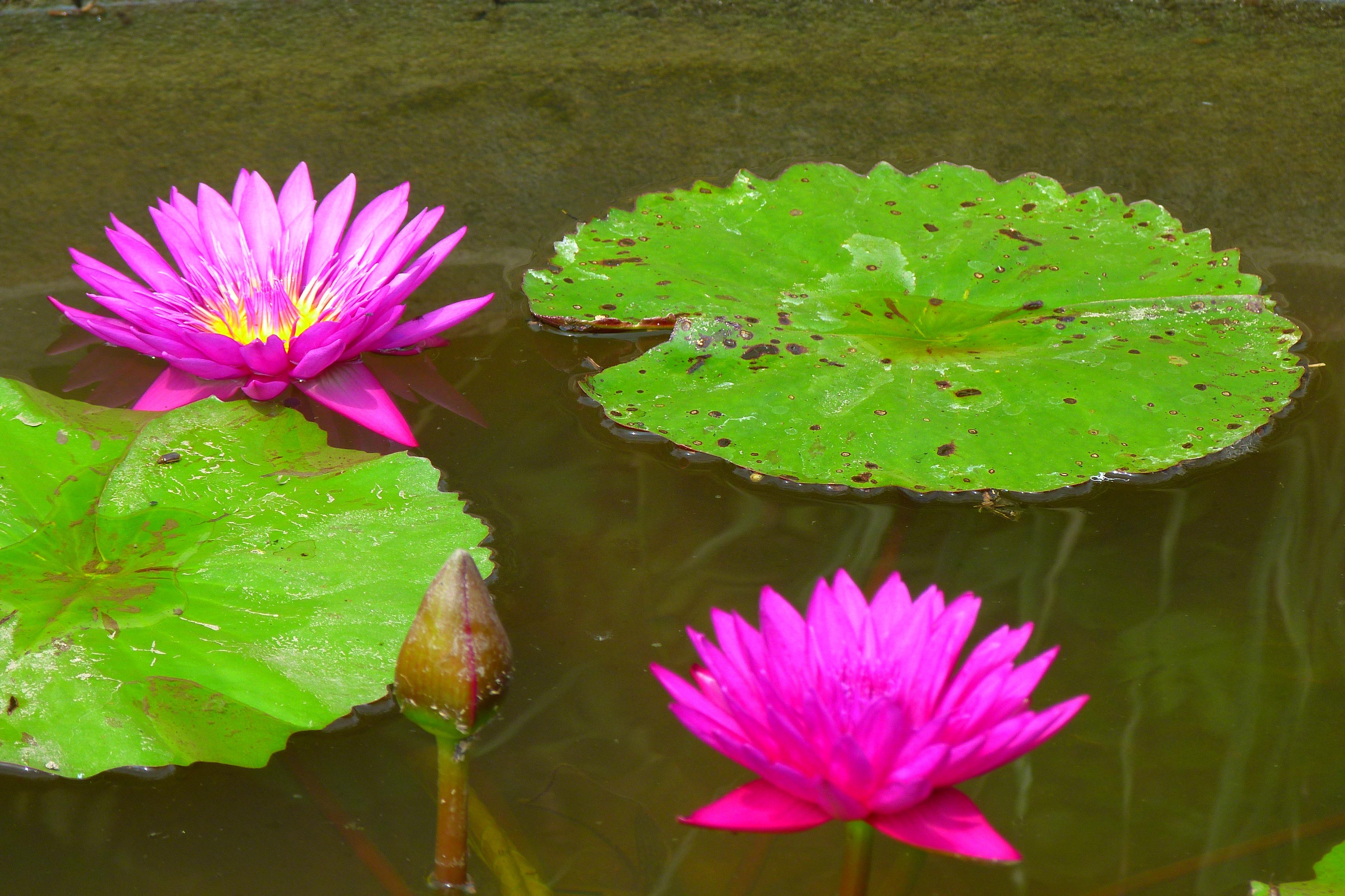 тогда картинки цветов водоемов с названиями что характерно для