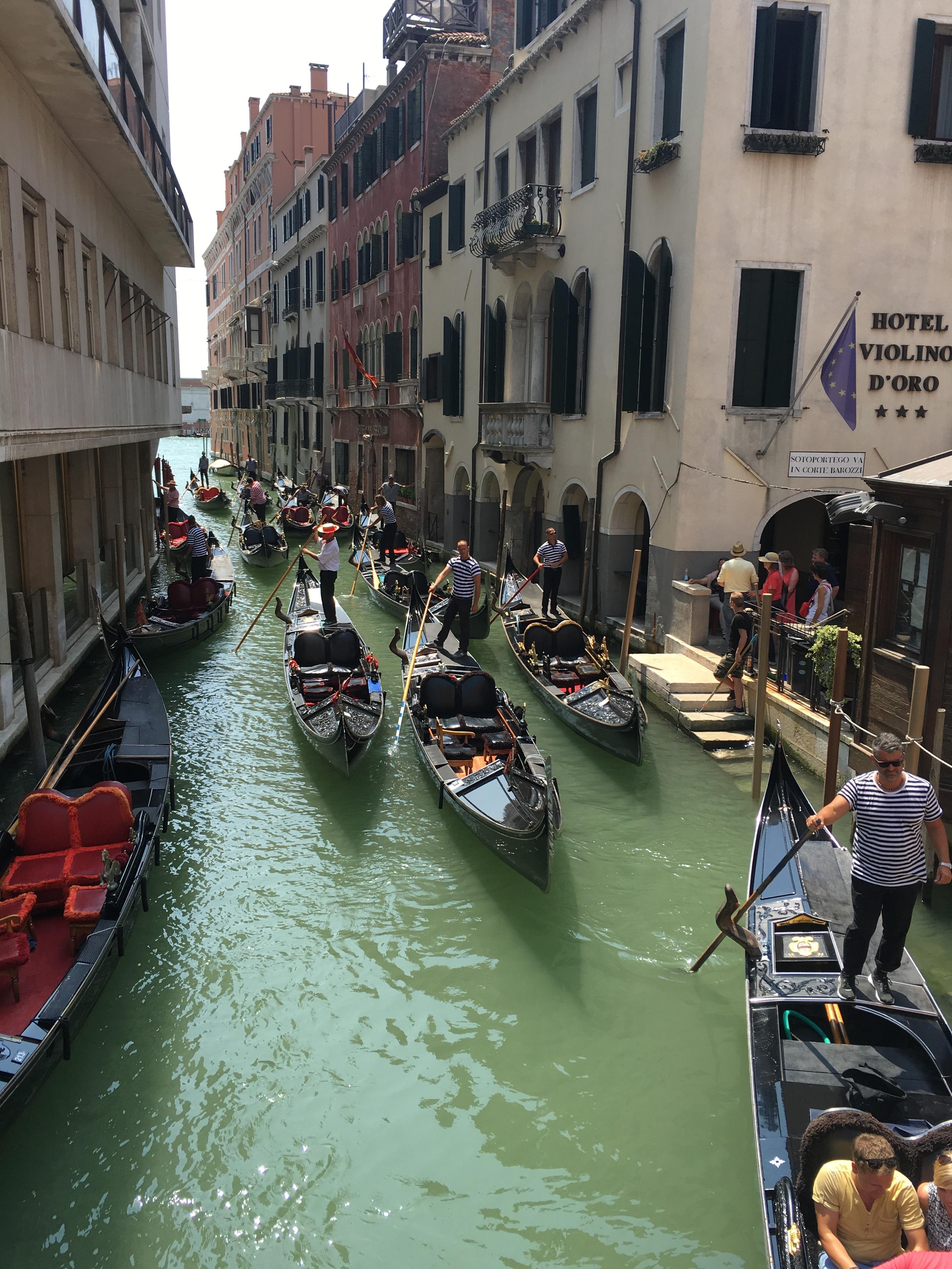 птицы проживают фото венецианской гондолы знают чего