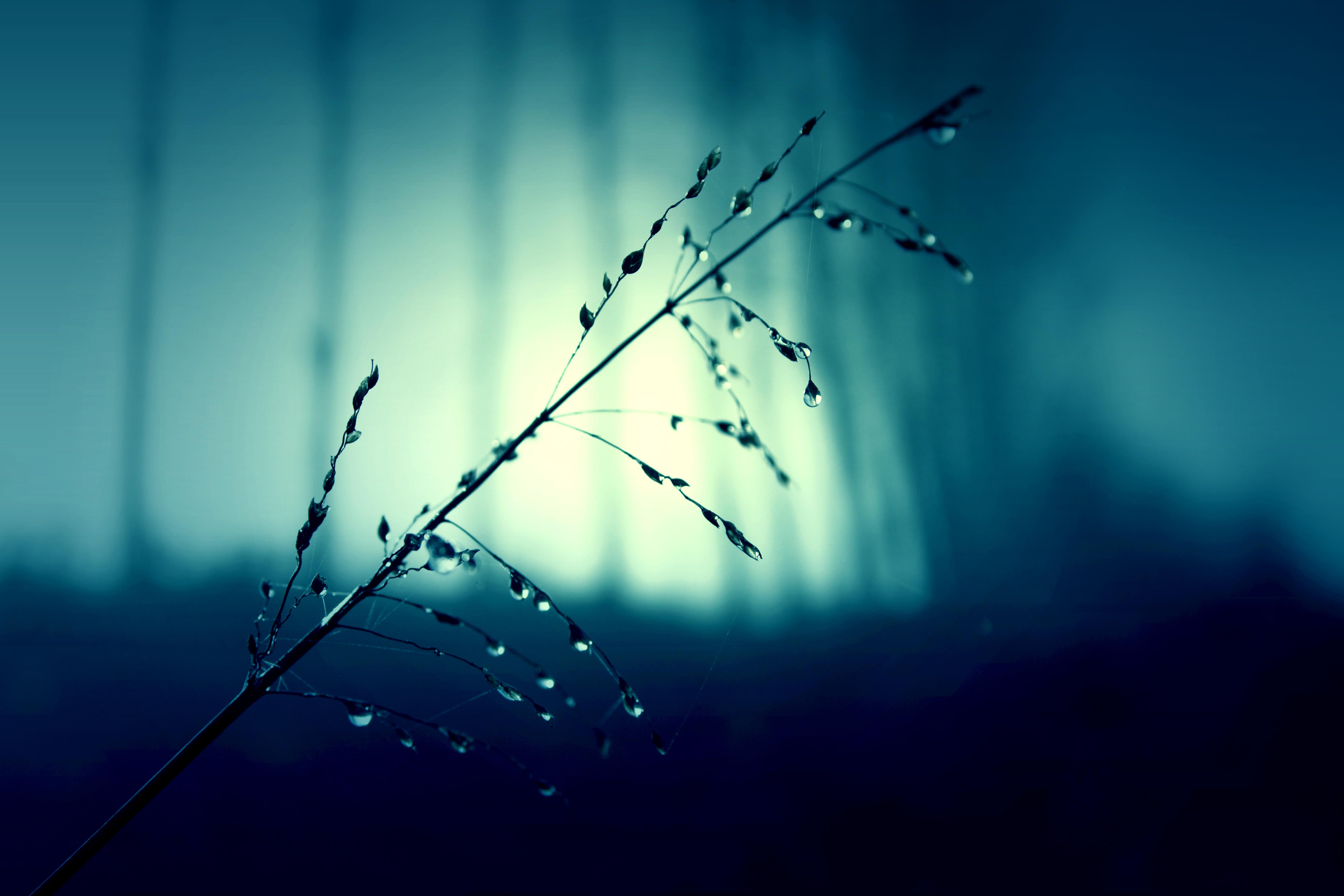 Free Images Branch Light Sunlight Rain Leaf Wave Flower Line Green Reflection Color Darkness Blue Electricity Rainy Raindrops Shape