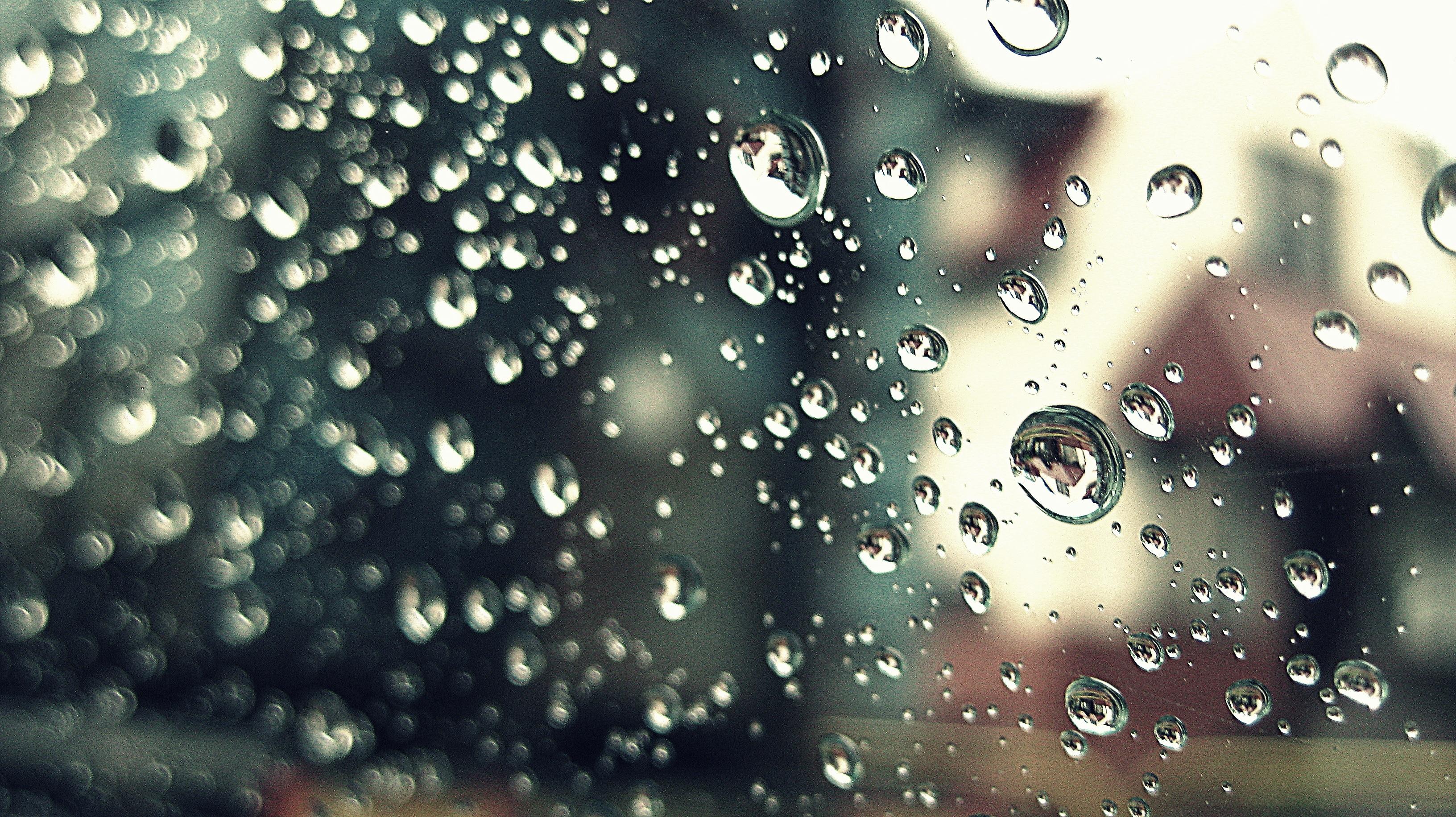 Free Water Branch Sunlight Rain Leaf Window