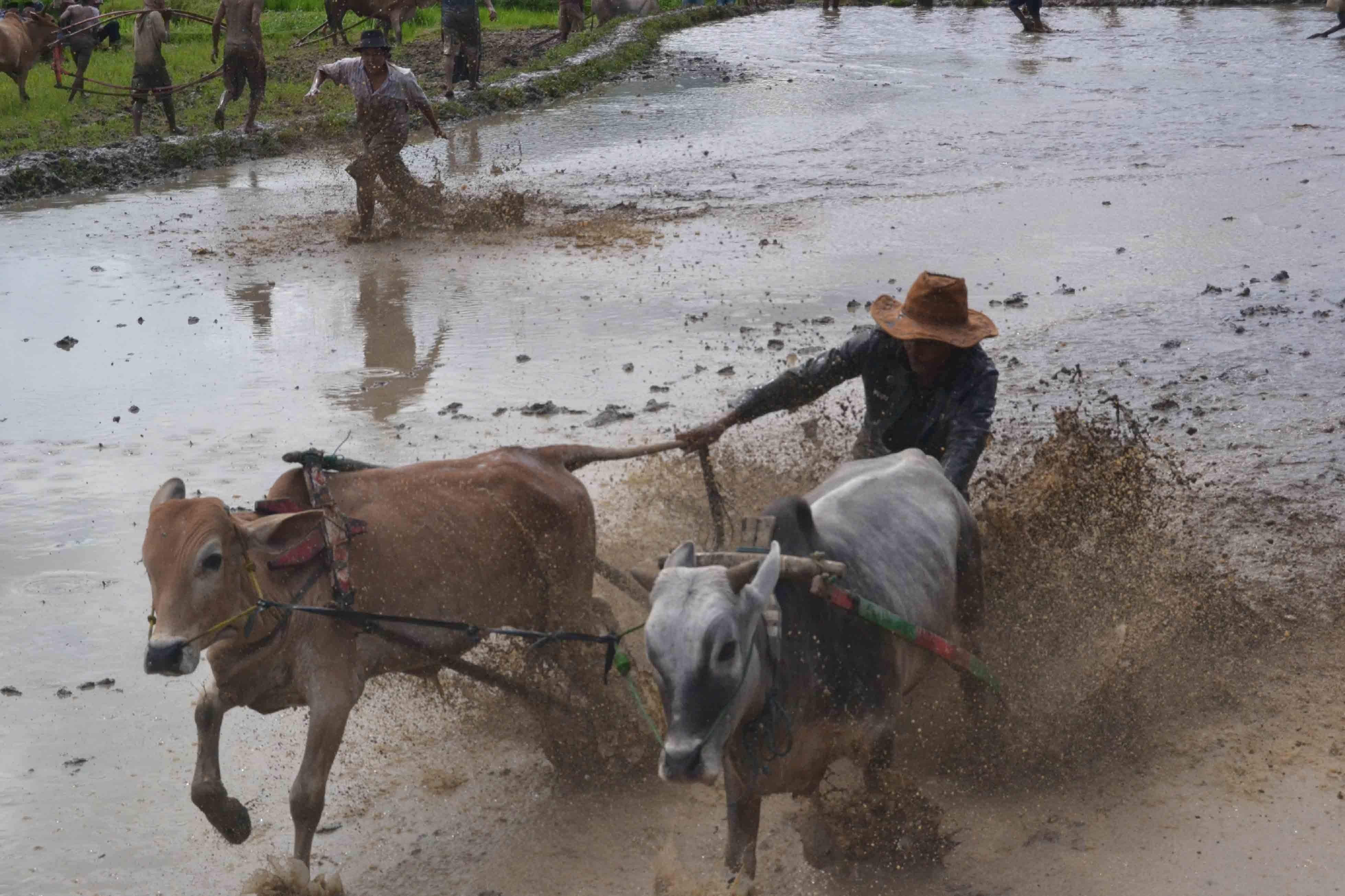 Cow Pulling Wagon : Images gratuites eau chariot vache bétail