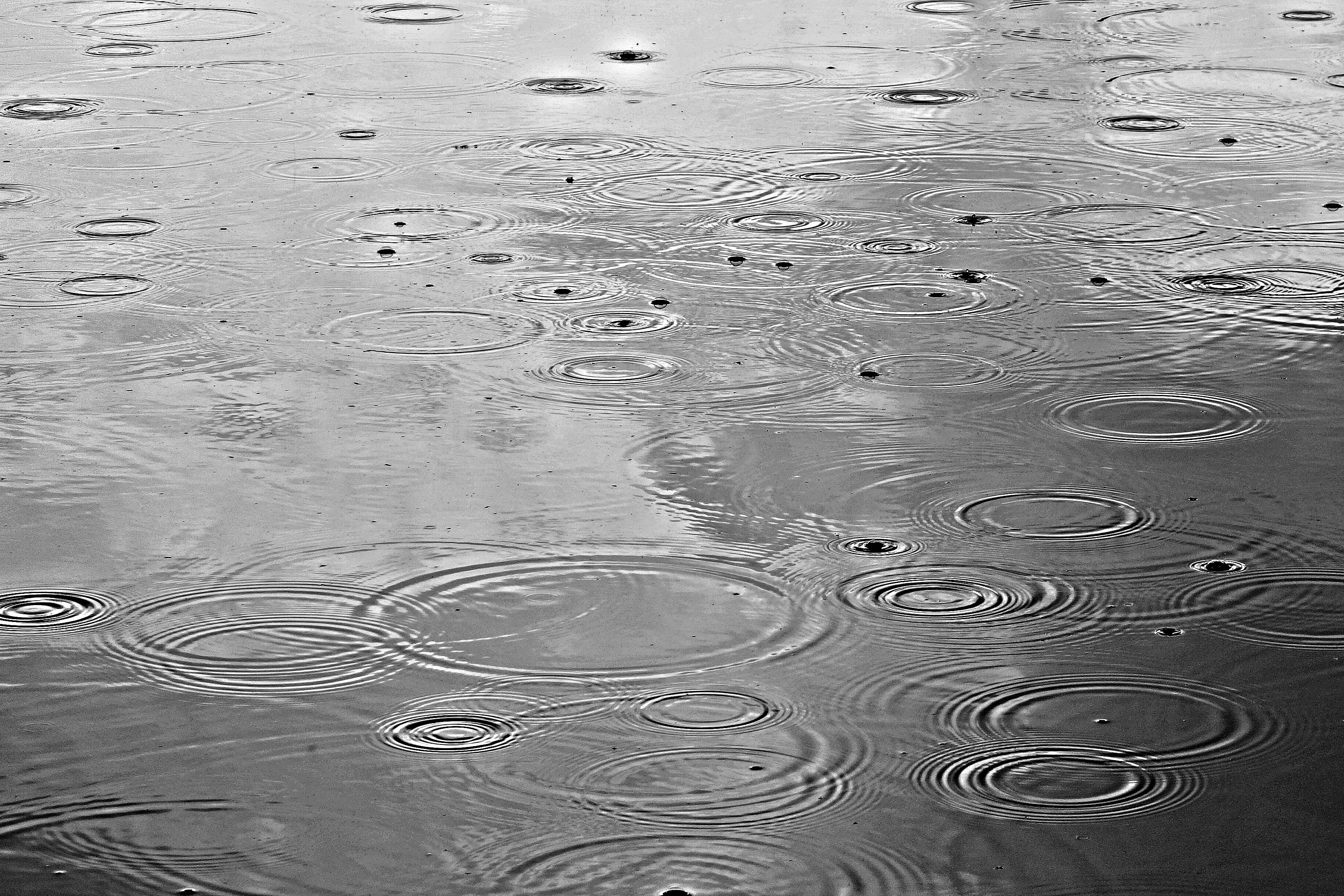 Gambar Penurunan Hitam Dan Putih Kayu Tekstur Tetesan Air