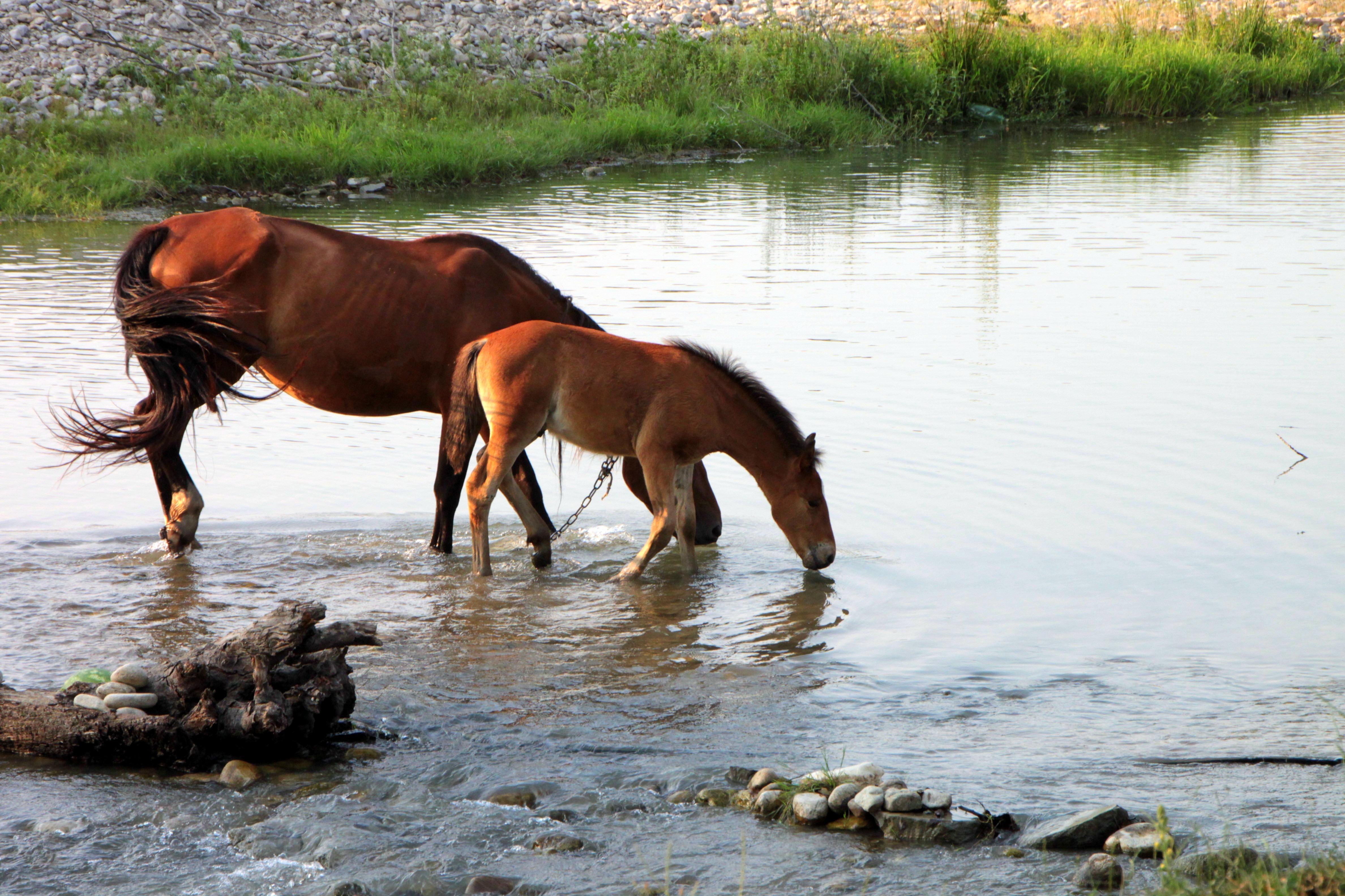 Рисунки лошади у воды