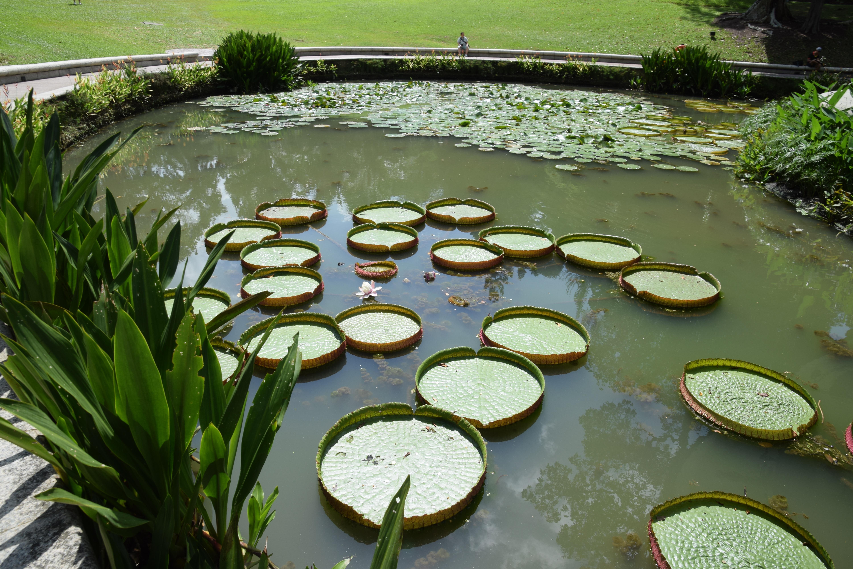 Fotos gratis flor verde piscina patio interior for Agua verde estanque