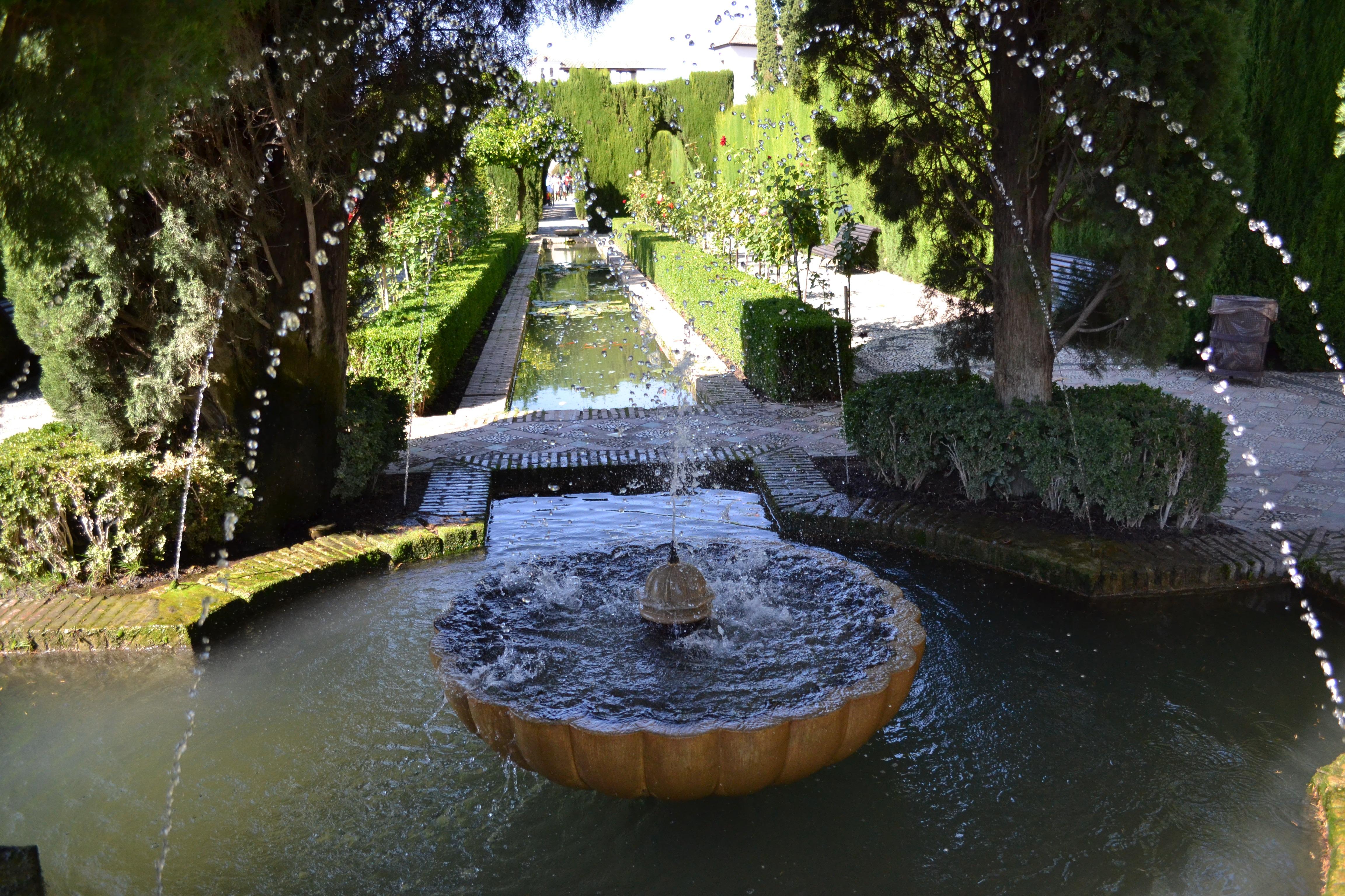 Images gratuites eau fleur rivi re tang r flexion for Miroir de l eau
