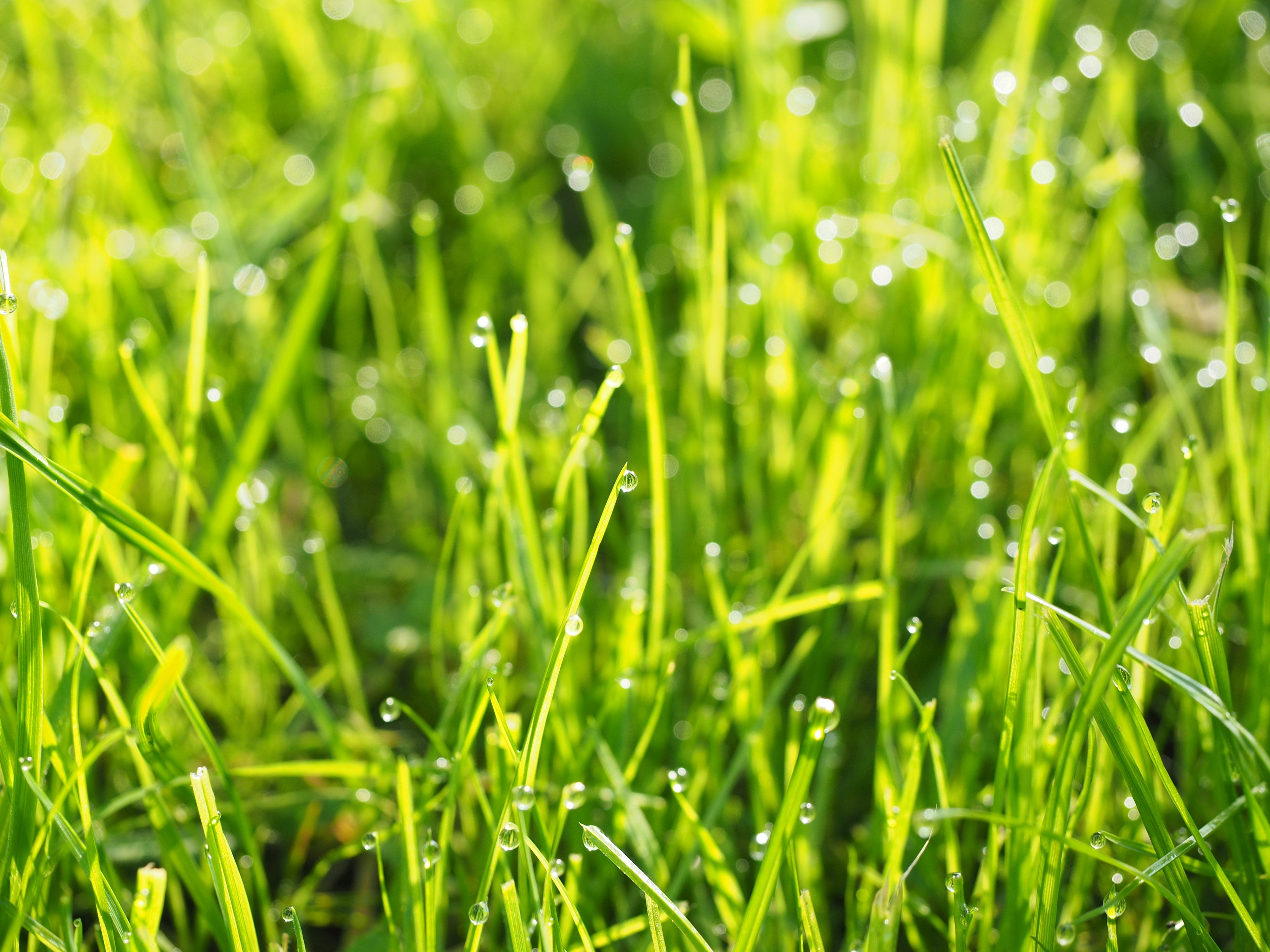 разложить картинки трава с росинкой ней как танцовщице