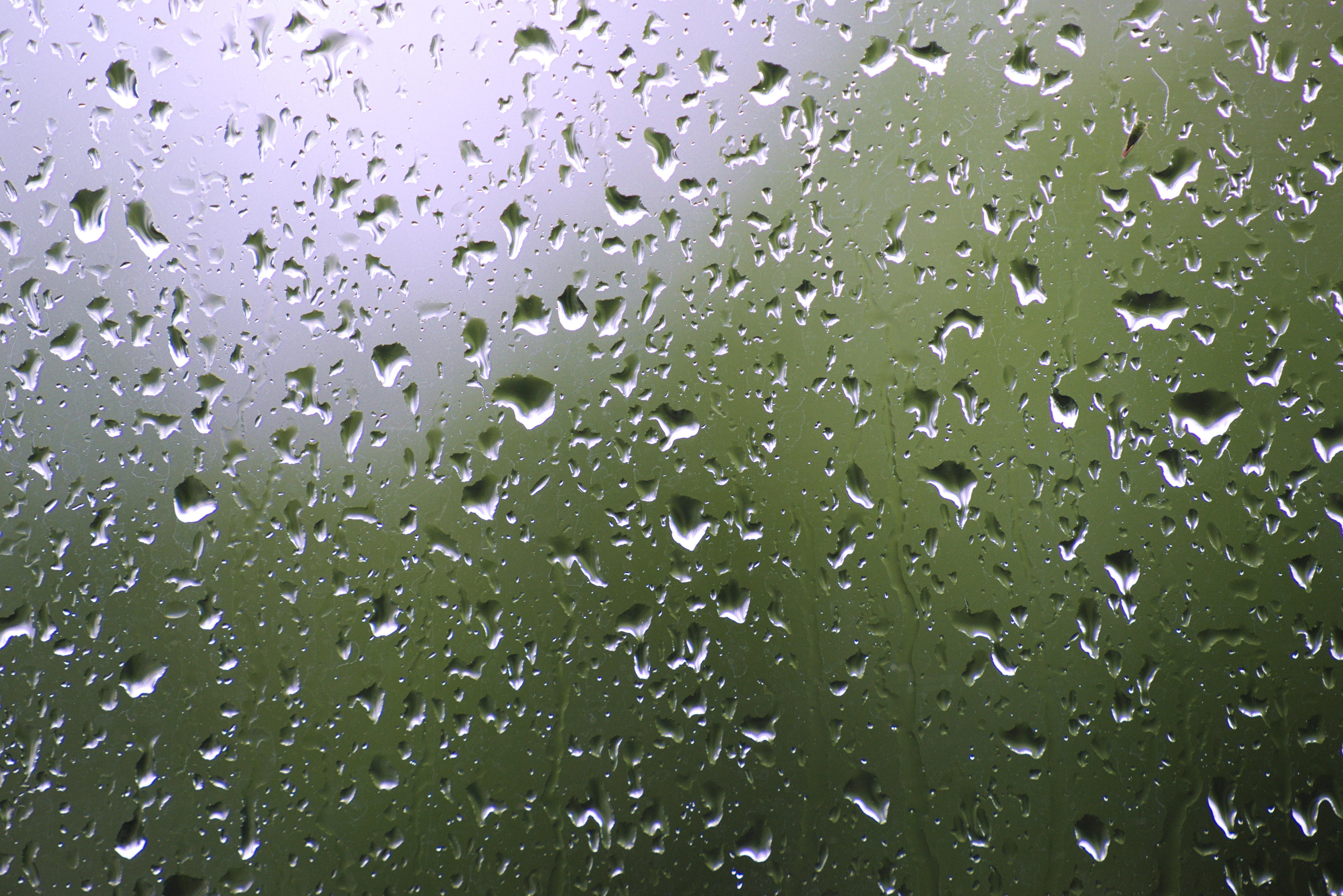 hình ảnh : Nước, cỏ, rơi vãi, mưa, Lá, Cửa sổ, ly, Mưa, mẫu, màu xanh lá, Thời tiết, Nhỏ giọt, trong suốt, buồn, lý lịch, mờ, Ẩm ướt, giọt nước, đĩa, ...