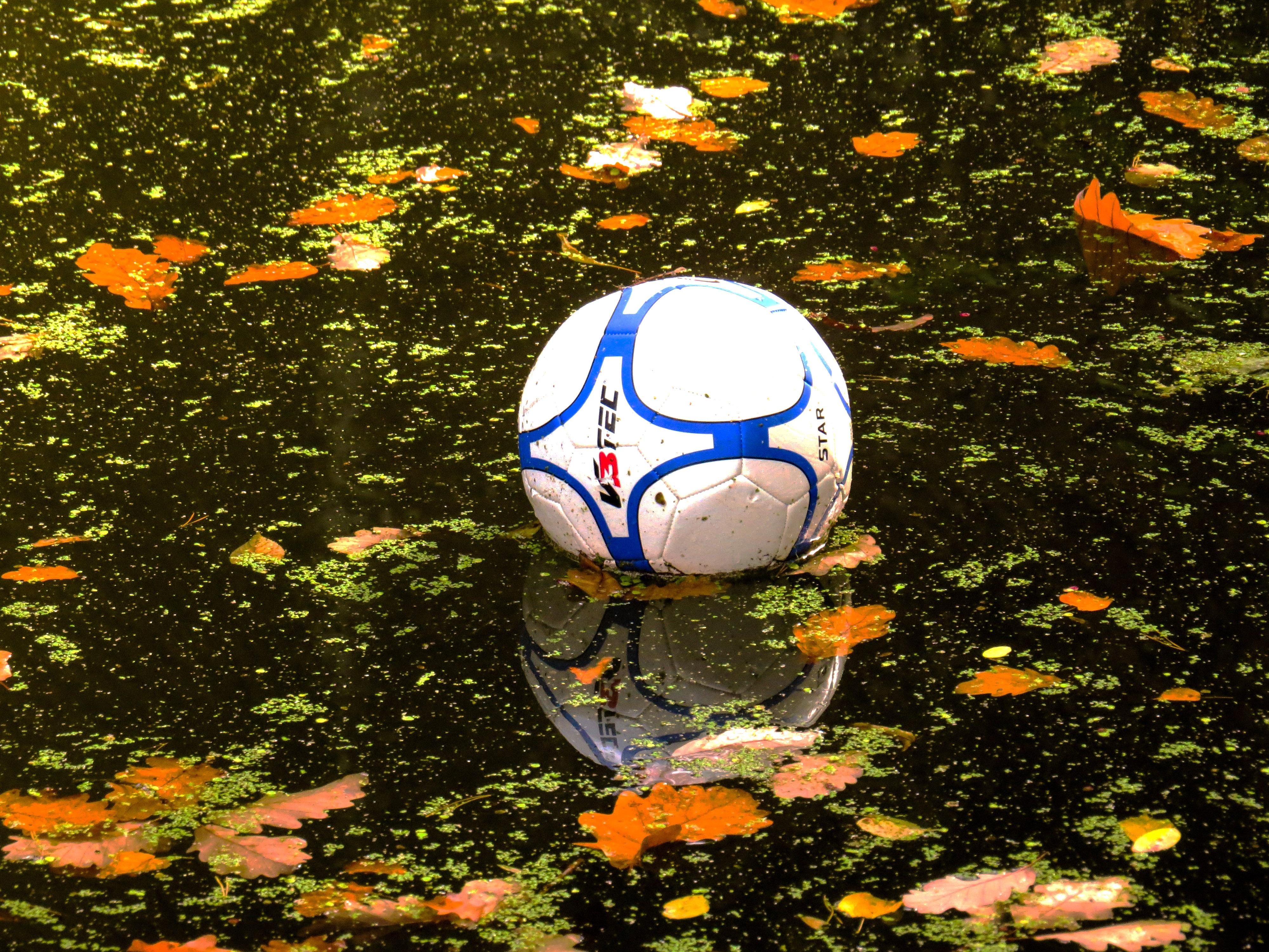 Kostenlose foto : Gras, Blume, Herbst, Gelb, Fußball, Spielzeug ...