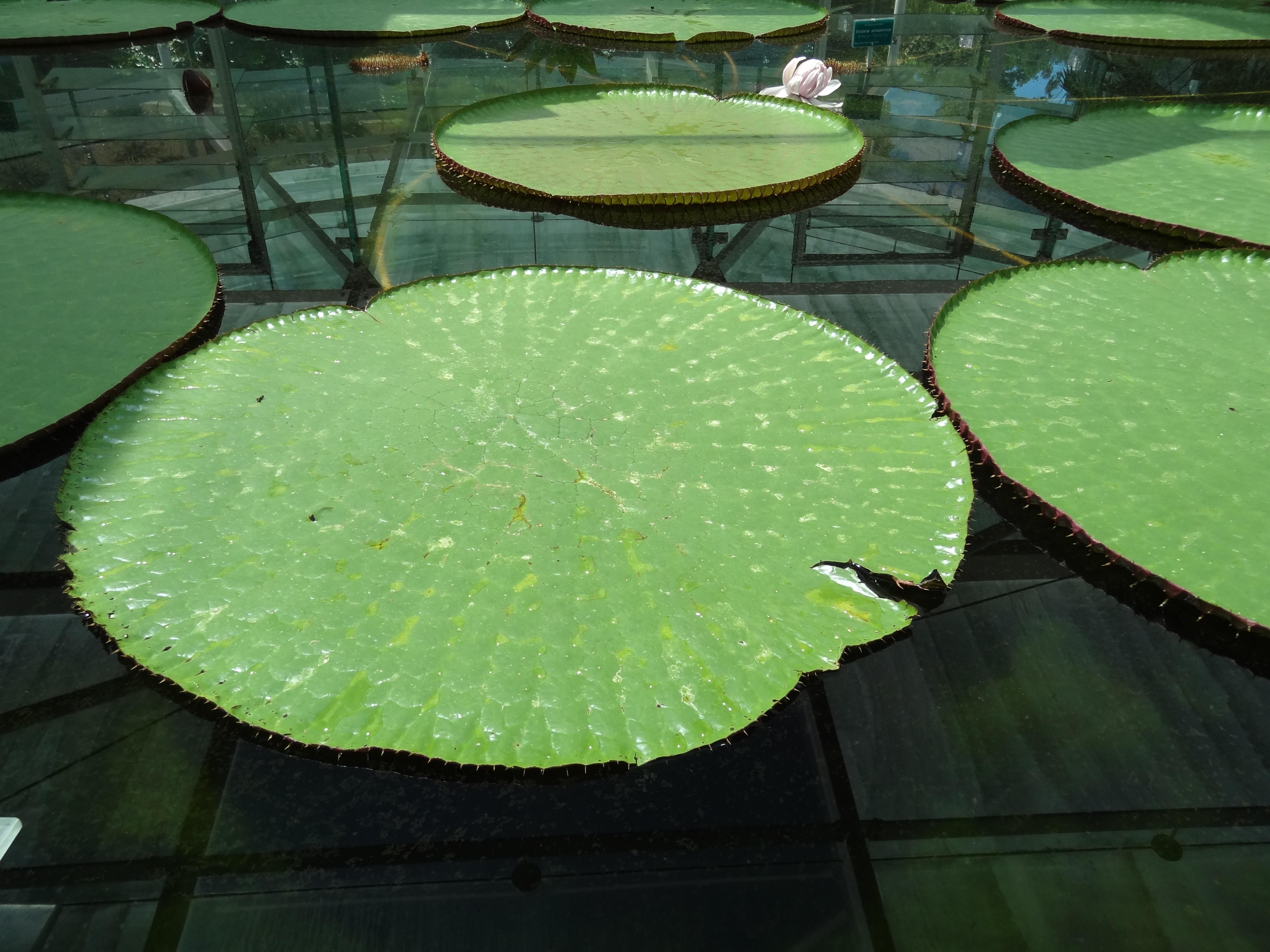 Fotos gratis c sped hoja flor lago verano estanque for Agua verde estanque