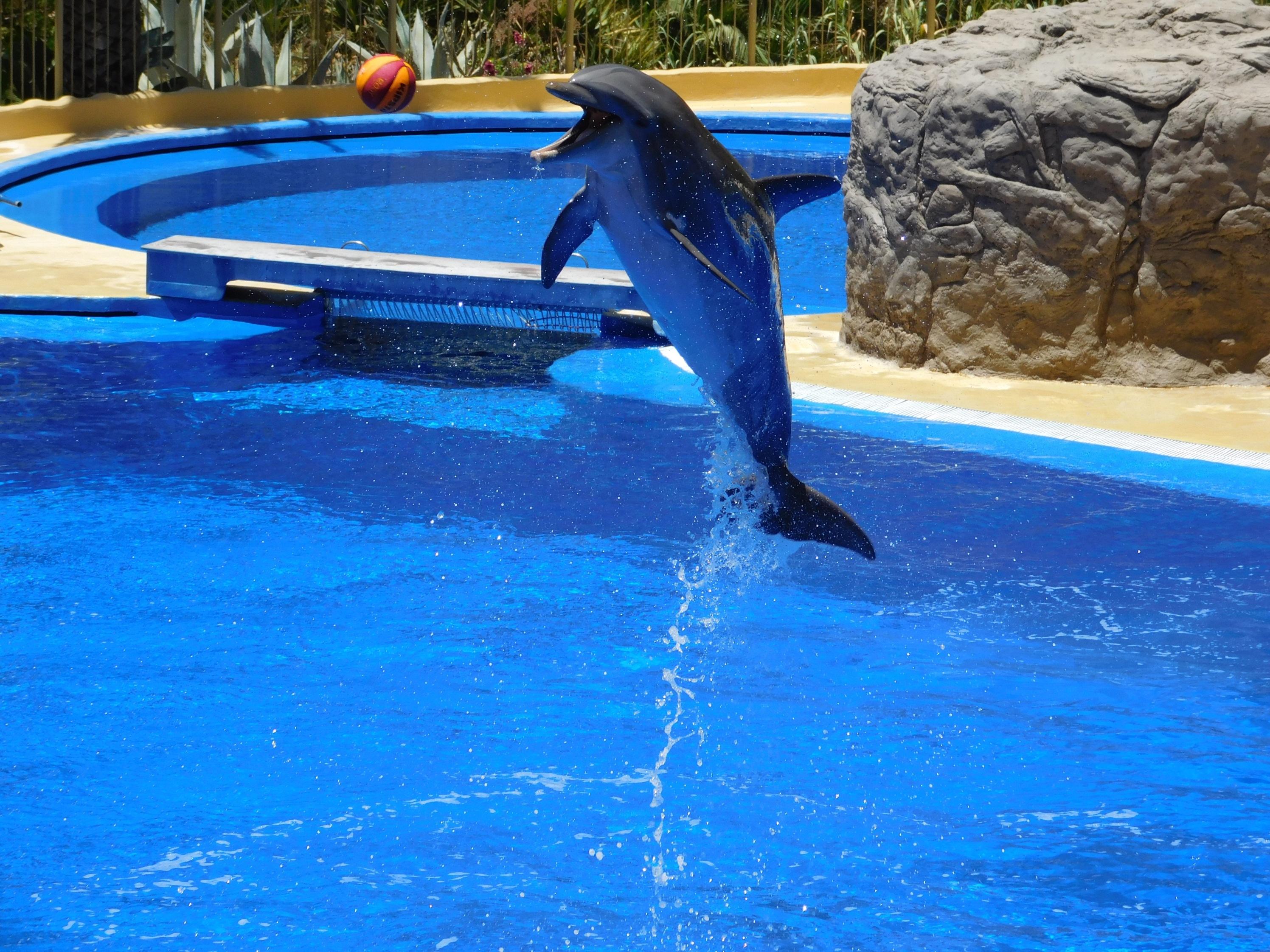 Fotos gratis agua saltar piscina espect culo divertido