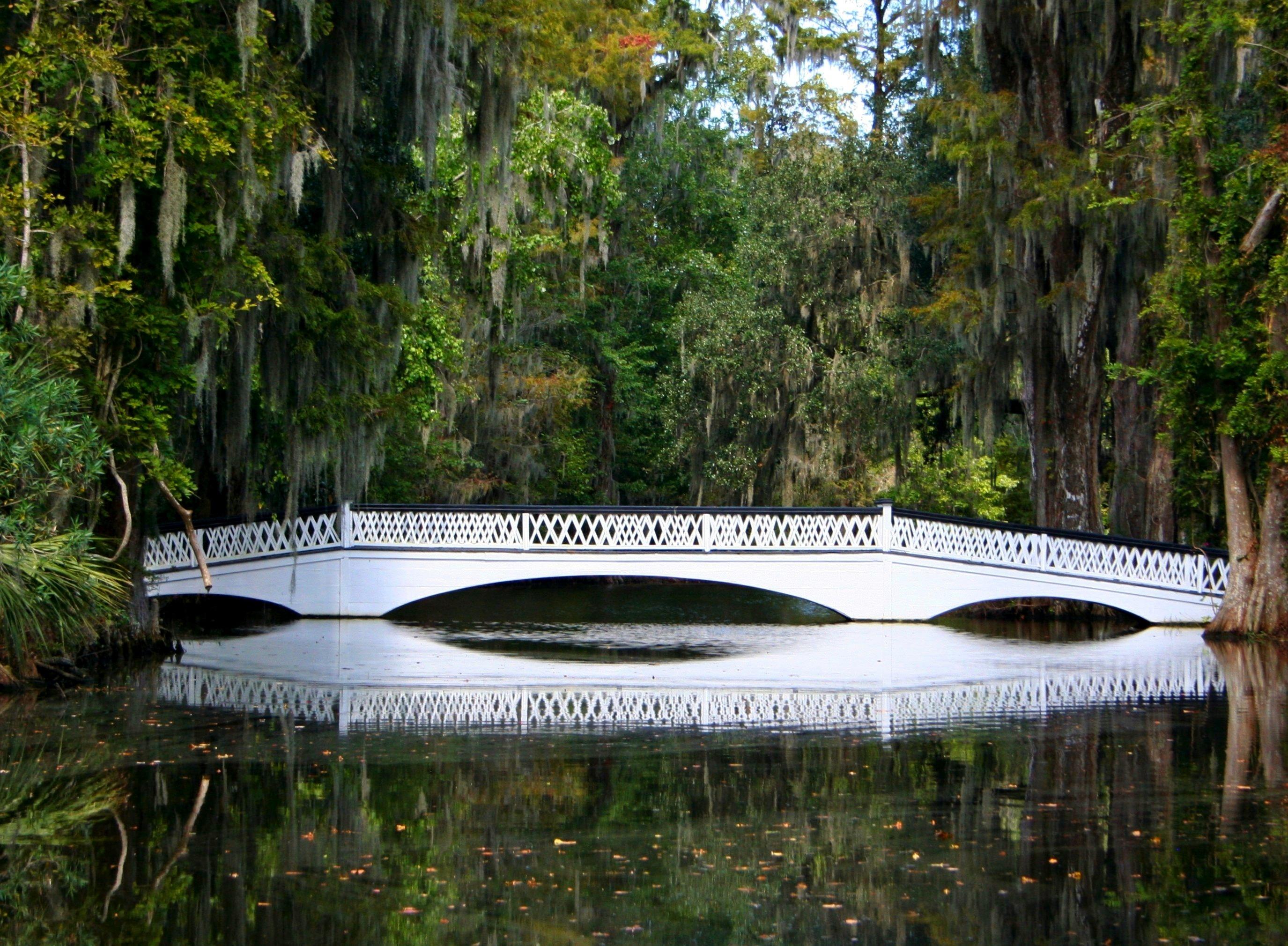 Gratis afbeeldingen : water moeras structuur vijver reflectie