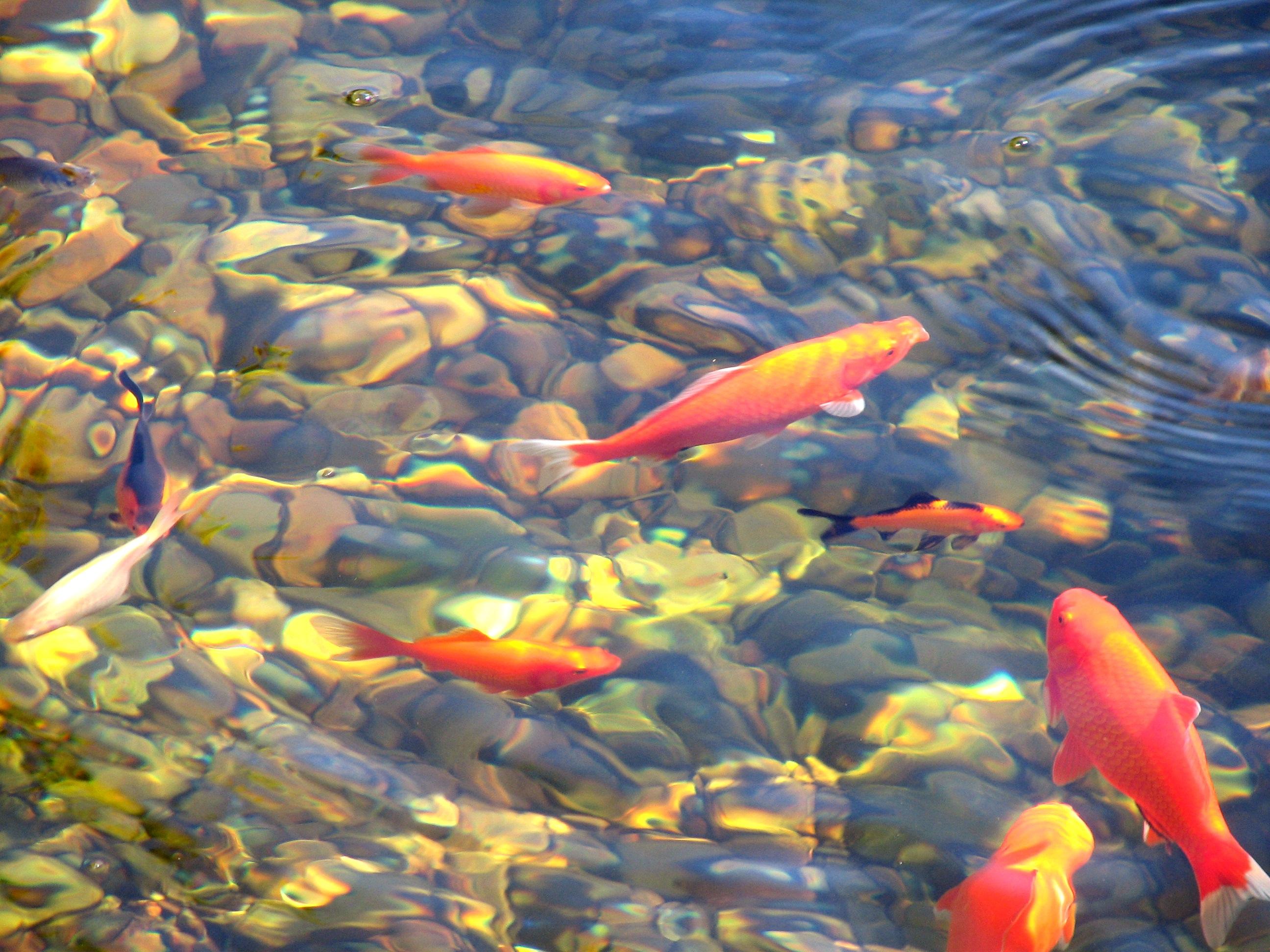 ZeN - Suda Balık