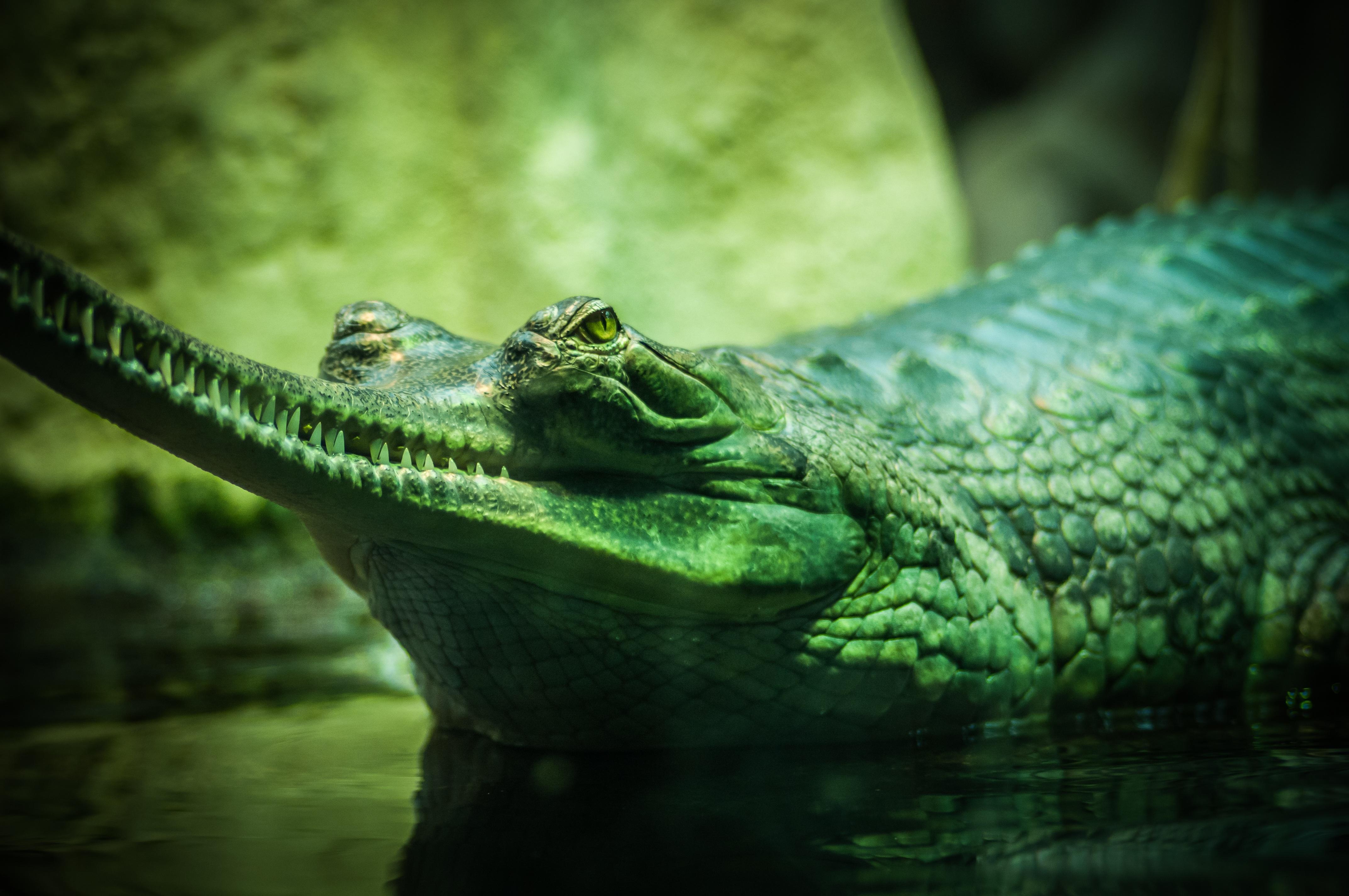 Forgotten Horrors: Ant-Walking Alligators of Hiroshima Free pictures of alligators